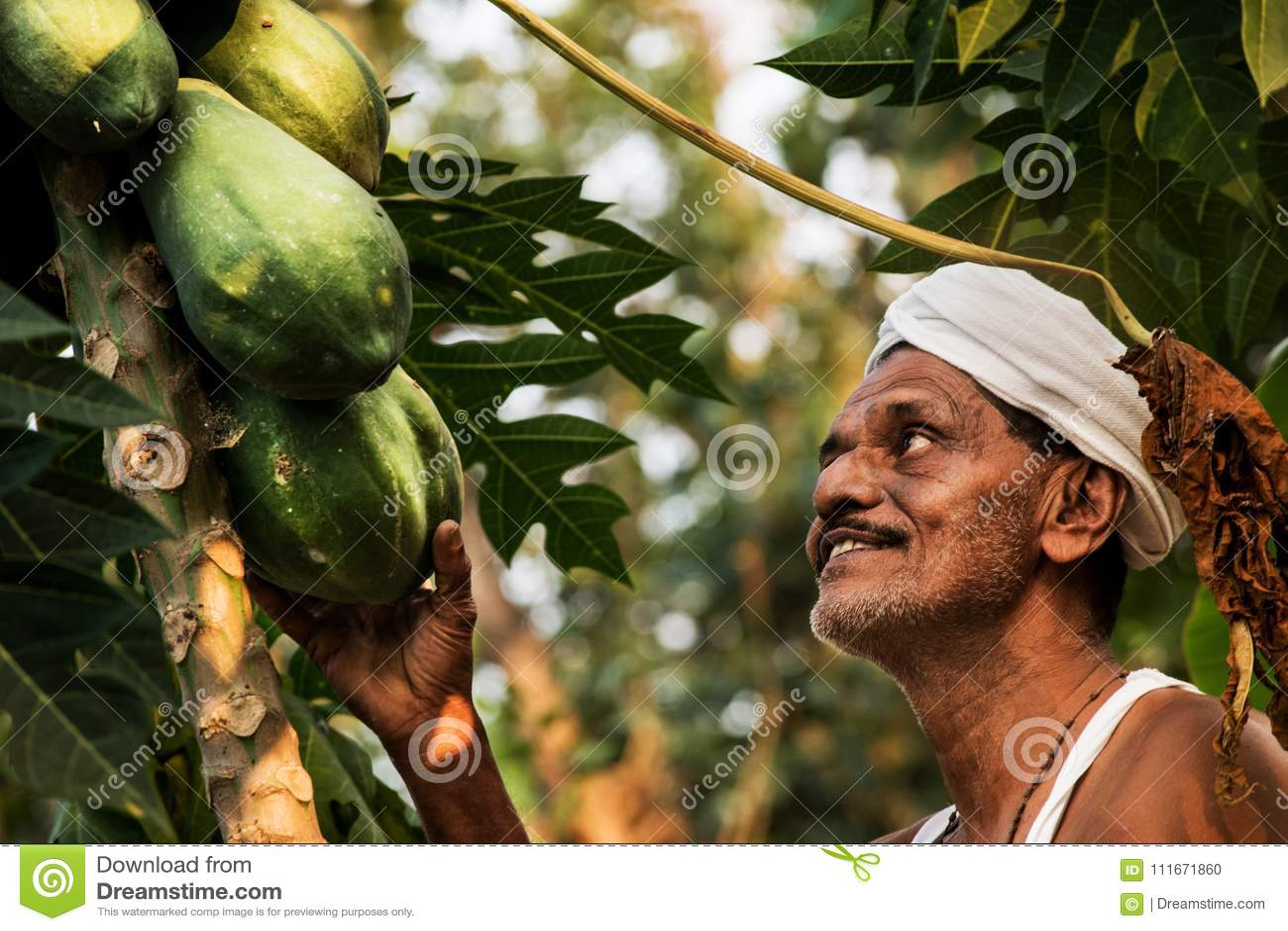 Papaya farmer in kerala