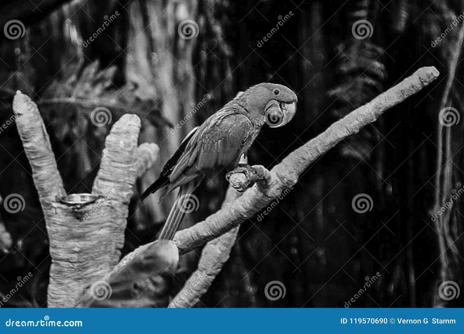Papegaai het Stellen in de Bomen