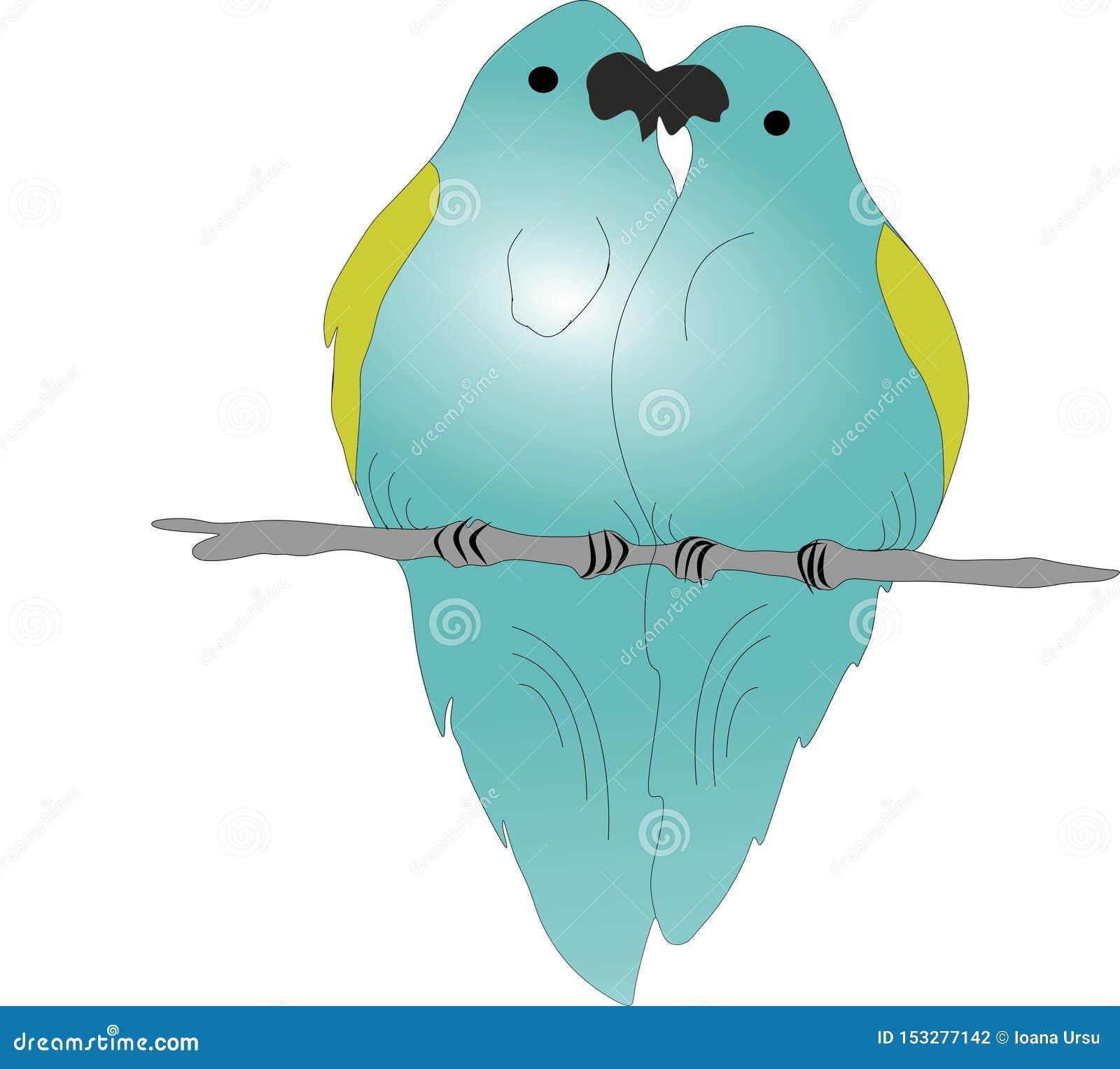 Papegaaien in liefde, twee papegaaien op een tak