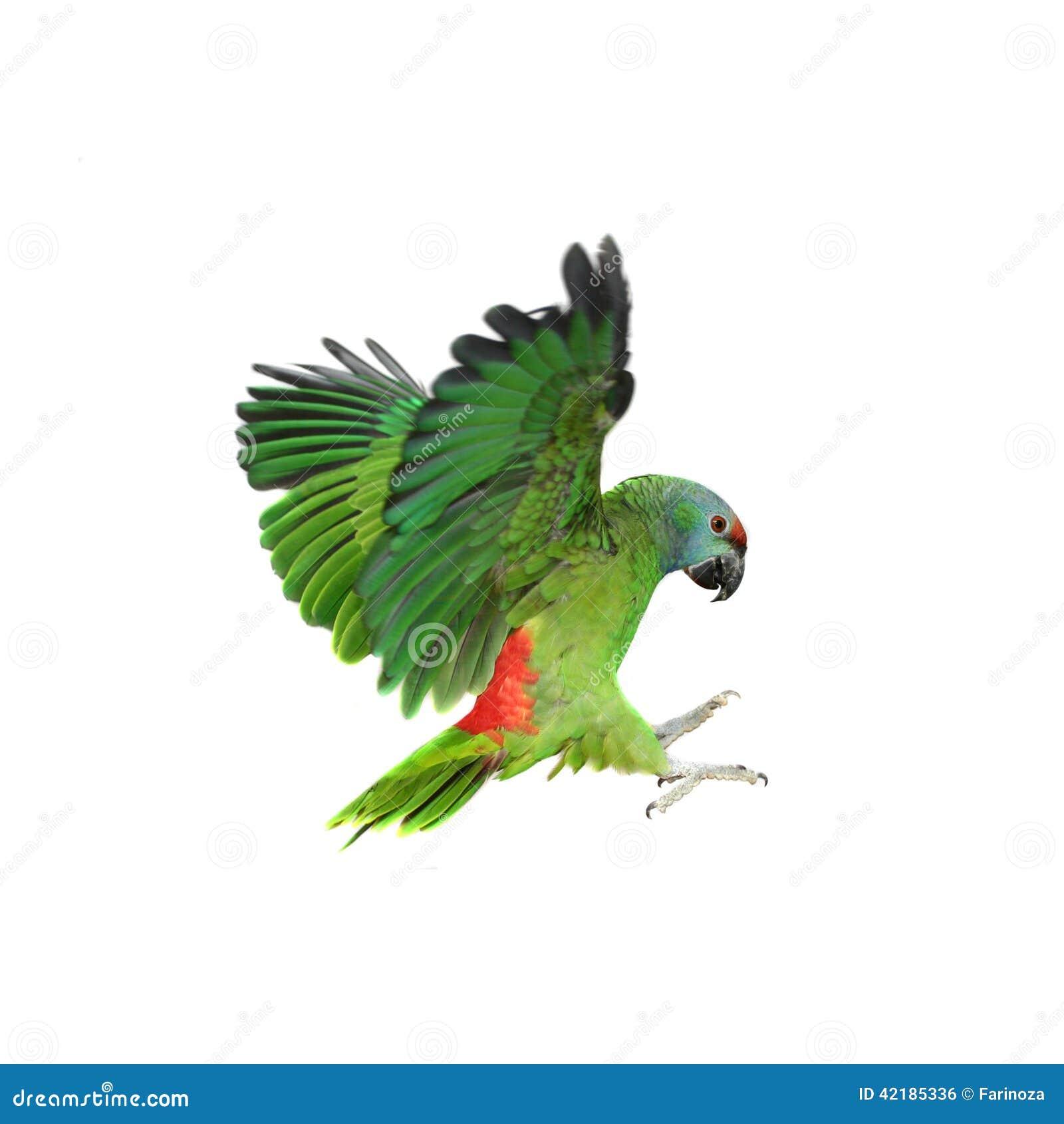Papegoja för flygfestivalamason på vit