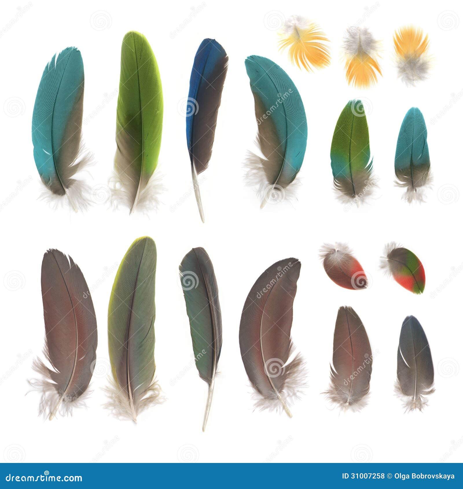 Papegojafjädrar