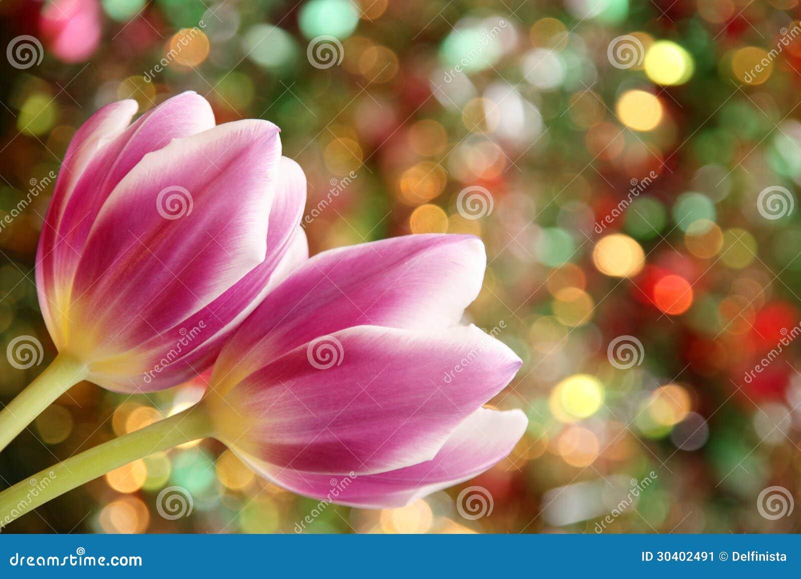 Papel pintado de Tulip Flower - foto de papel de tarjetas de Pascua