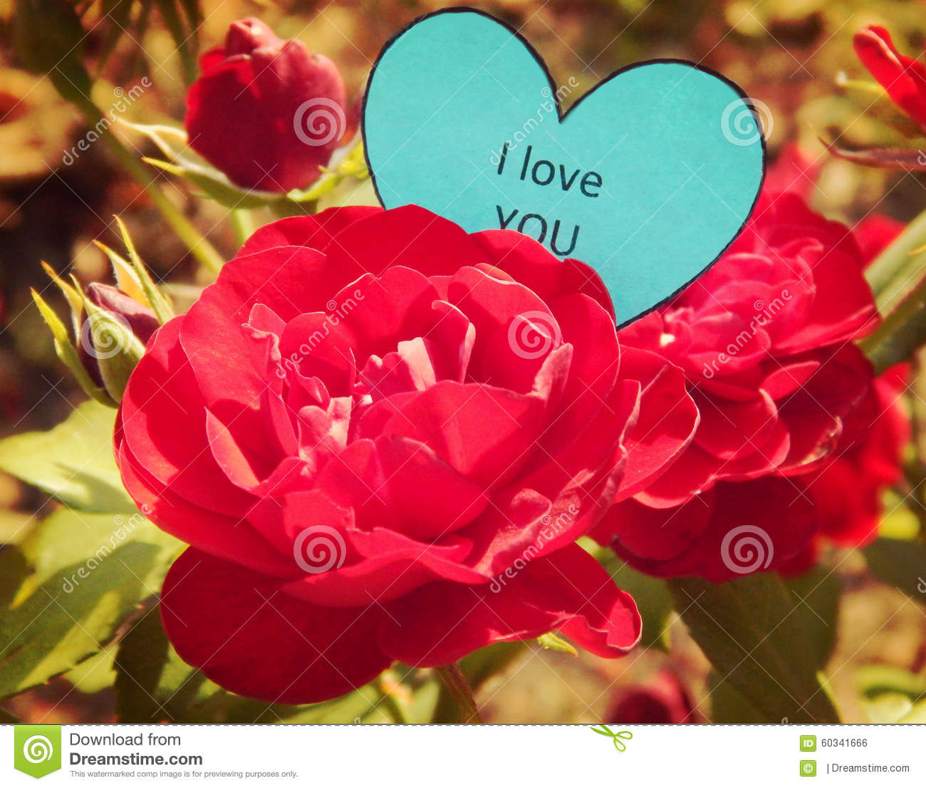 paper heart i love you on the red rose stock photo image of heart