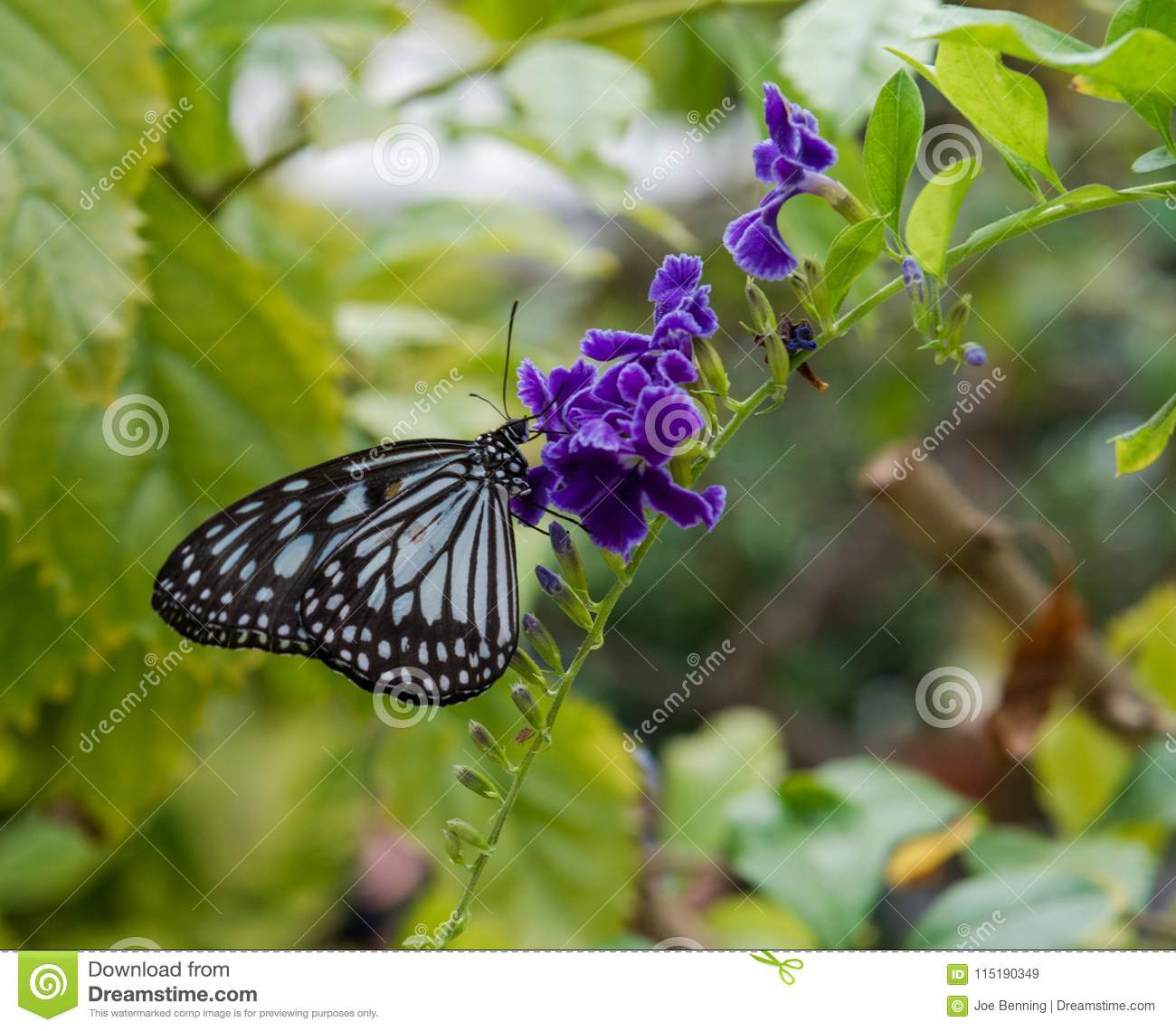 Paper kite butterfly clings to a branch stock image image of download paper kite butterfly clings to a branch stock image image of flower beauty mightylinksfo