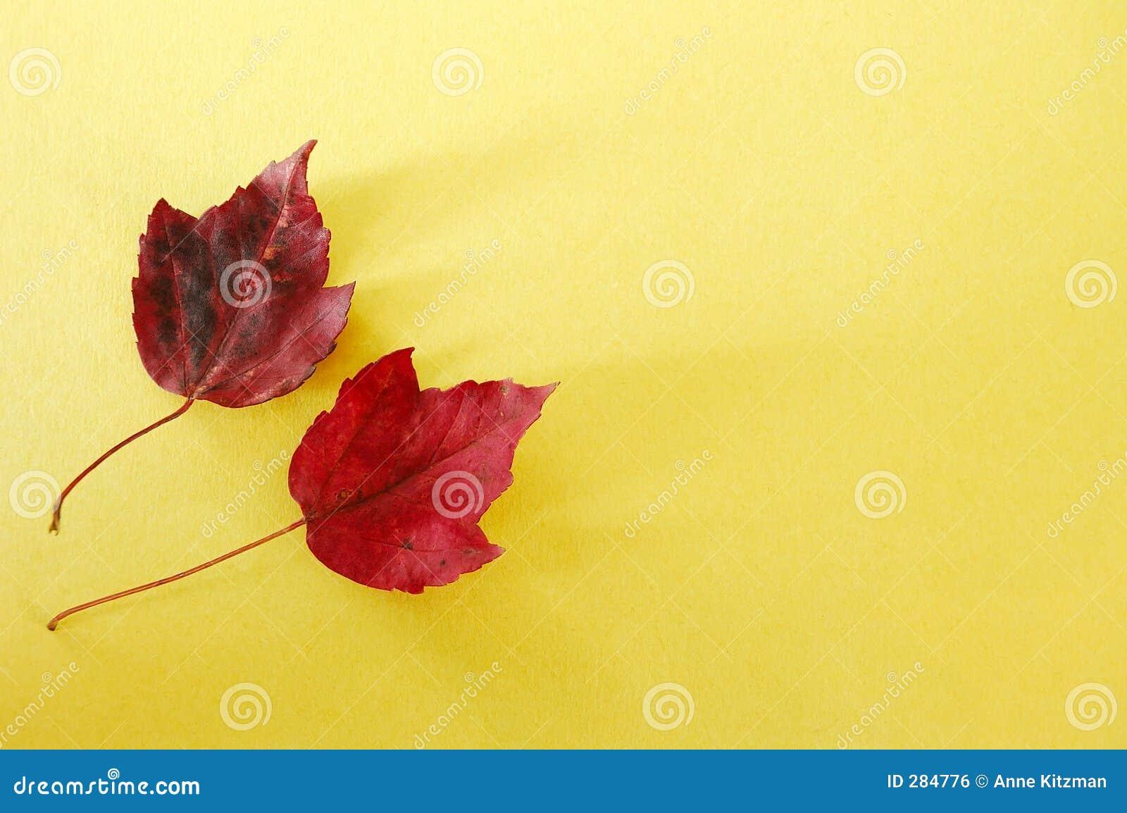 Paper röd yellow för leaves