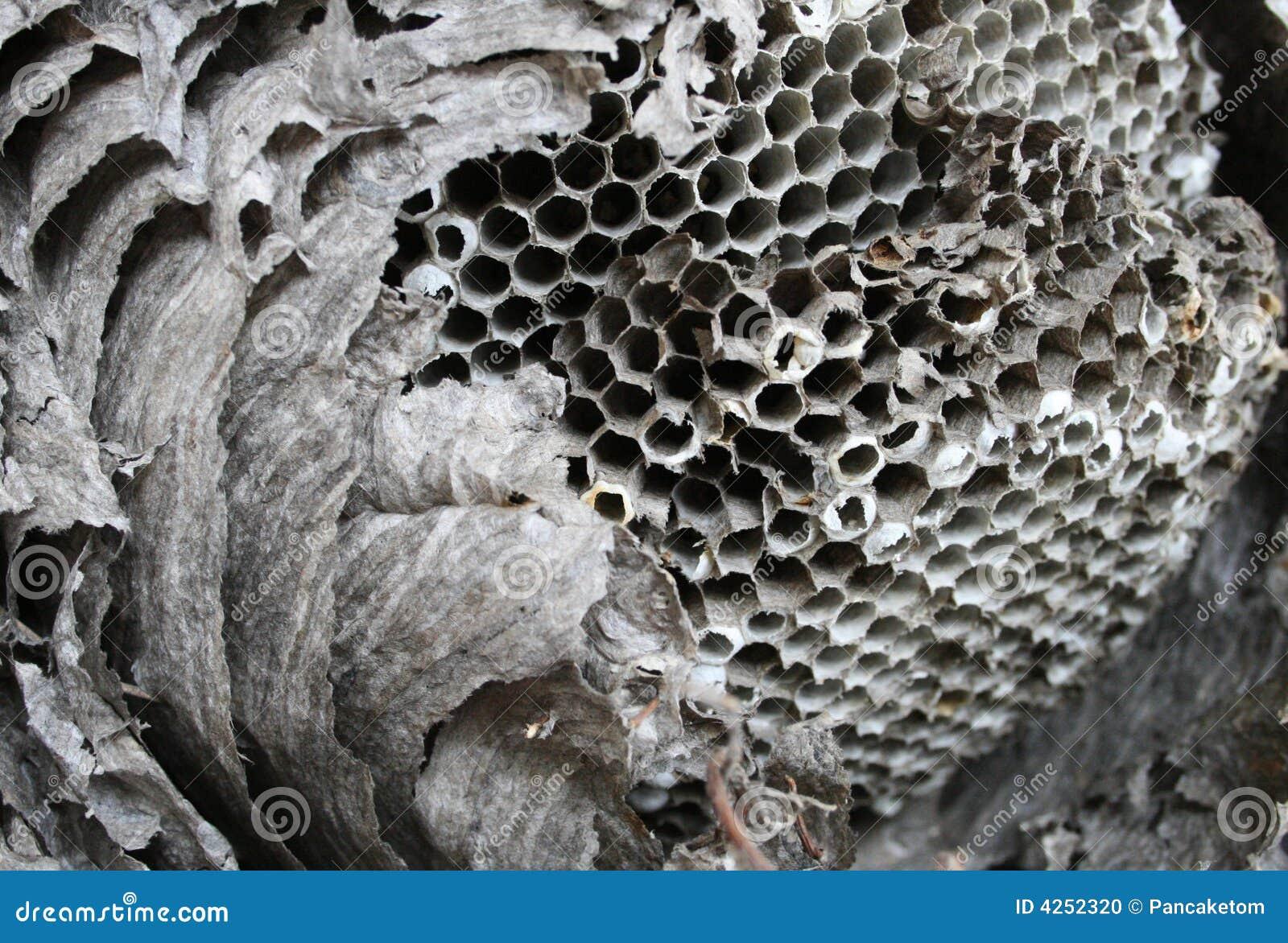 Paper wasp för rede