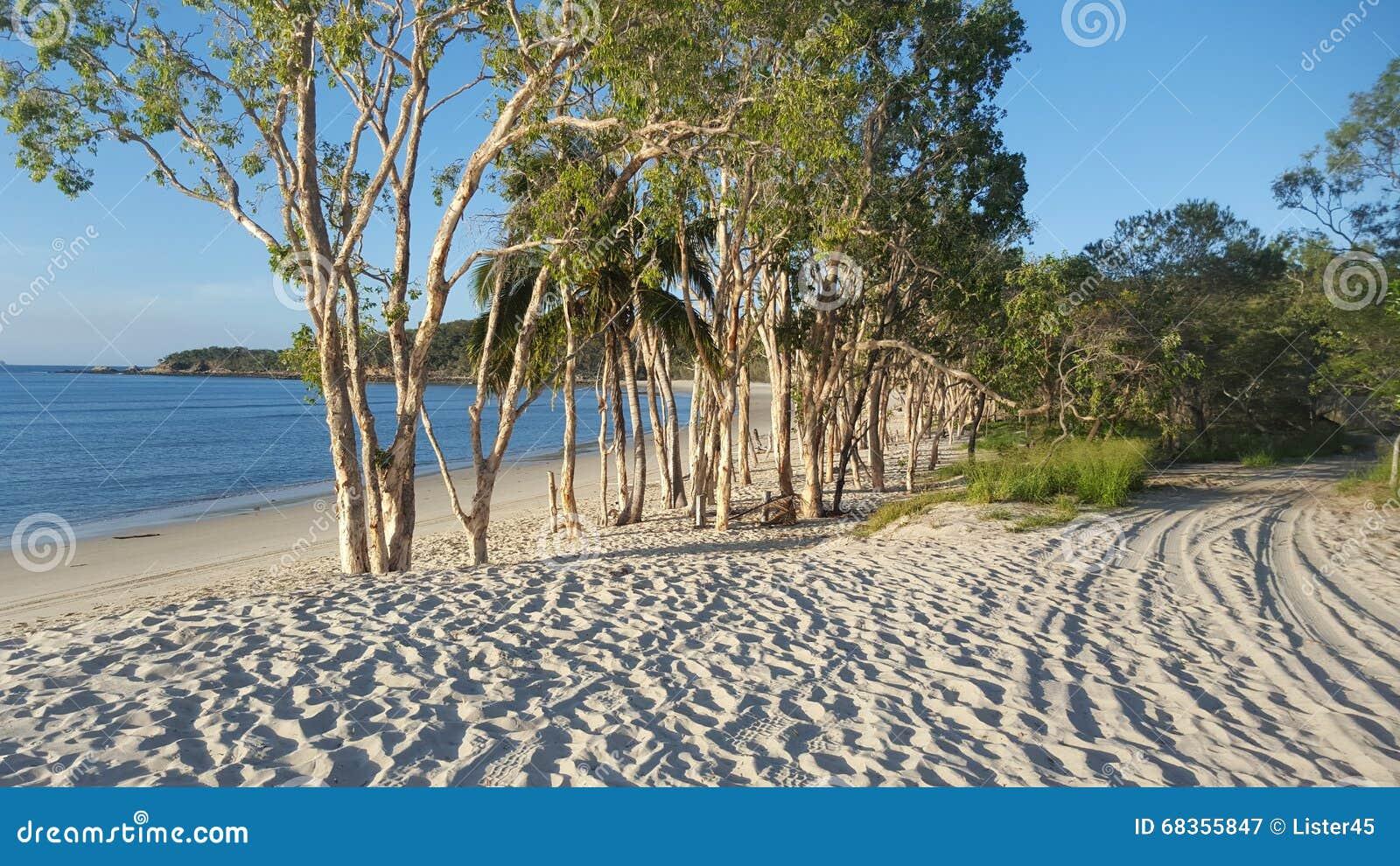 Paperbark drzewa na Wielkiej Keppel wyspie