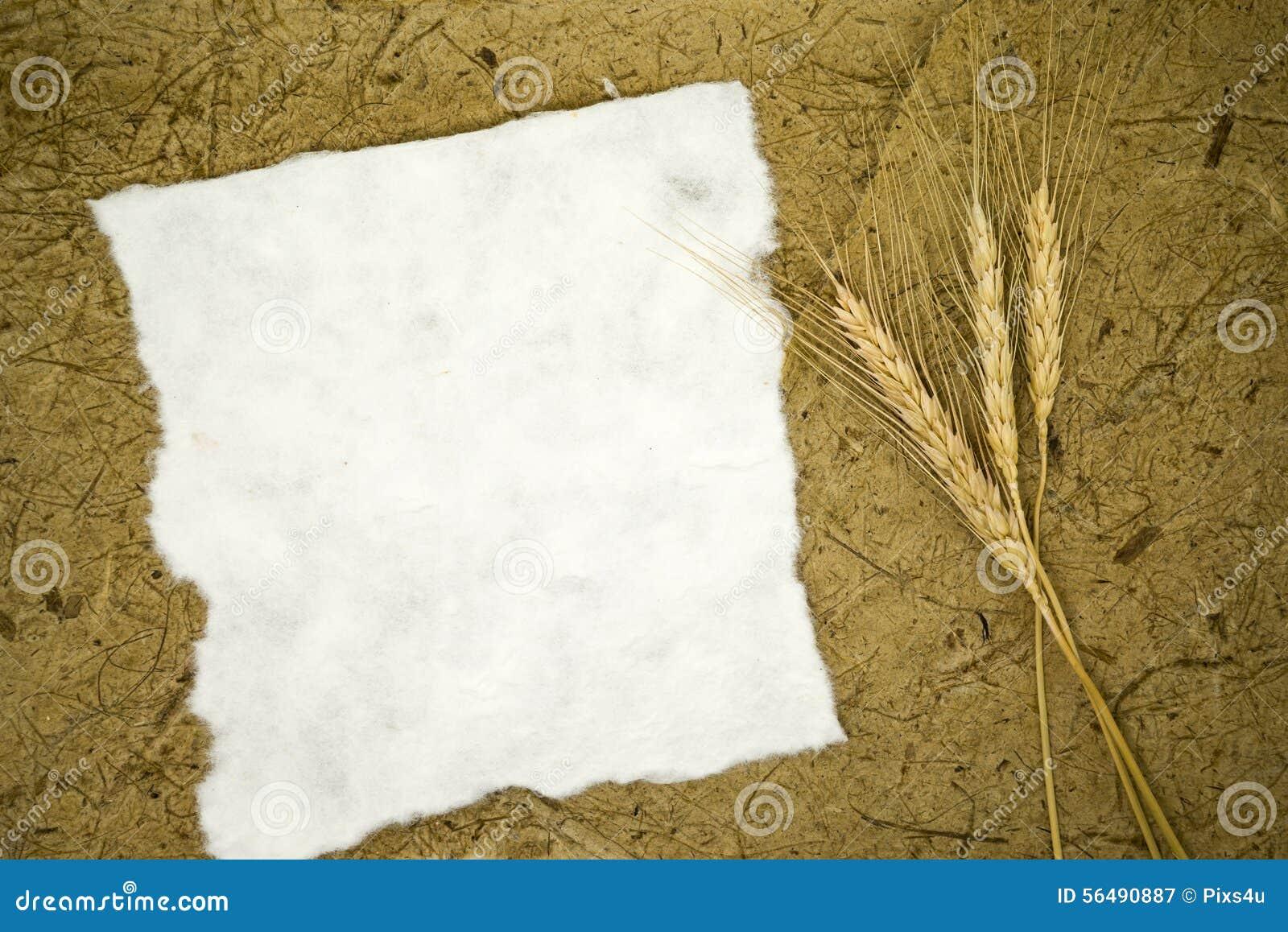 Papier blanc avec du blé d oreilles