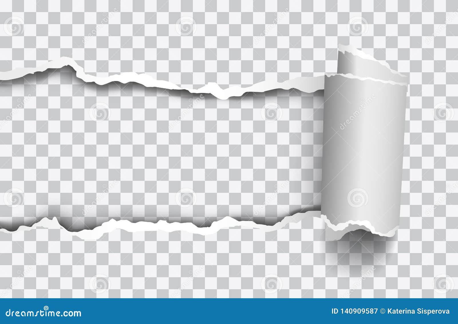 Papier déchiré réaliste de vecteur avec le bord rollled sur le fond transparent