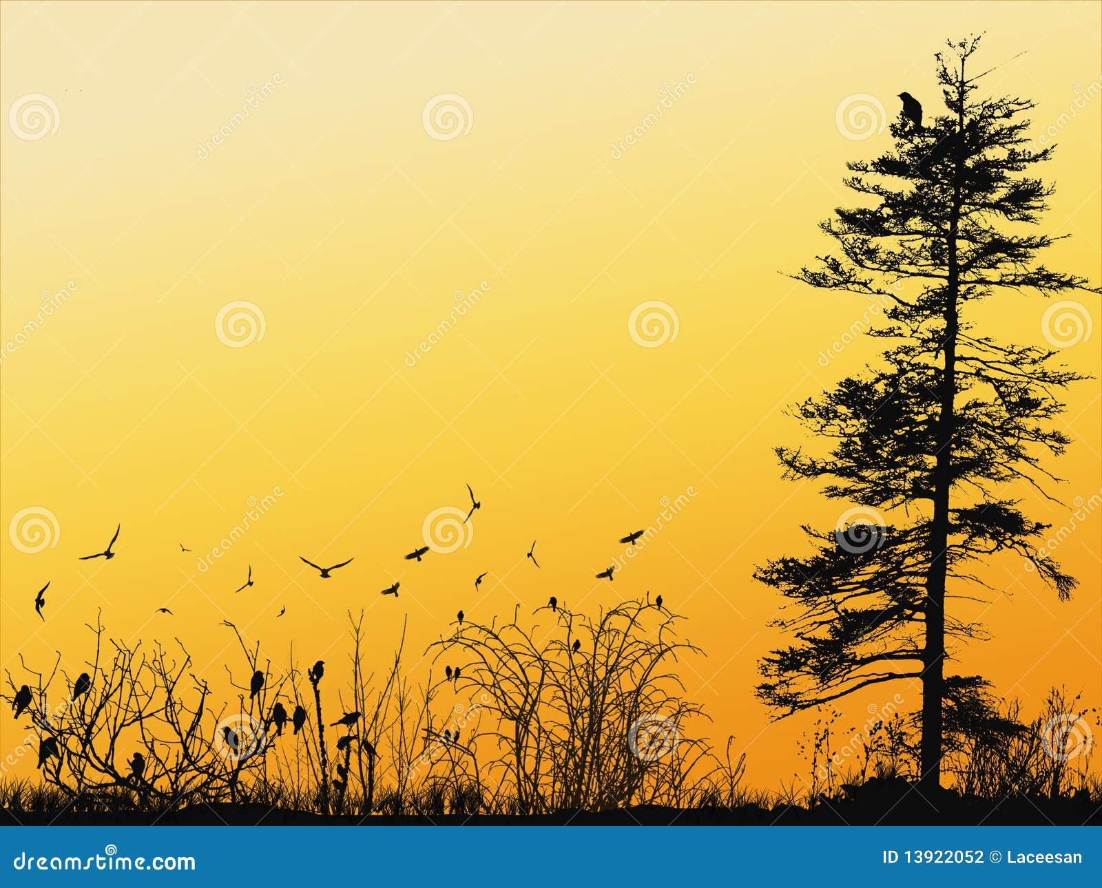 Papier peint d 39 oiseaux photographie stock image 13922052 - Papier peint oiseaux ...