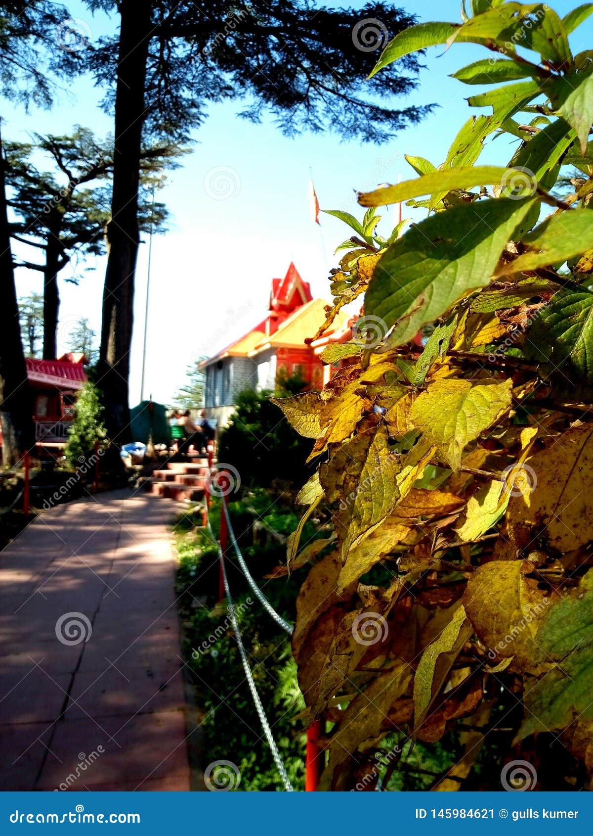 Papier peint de feuilles d automne pour le fond mobile