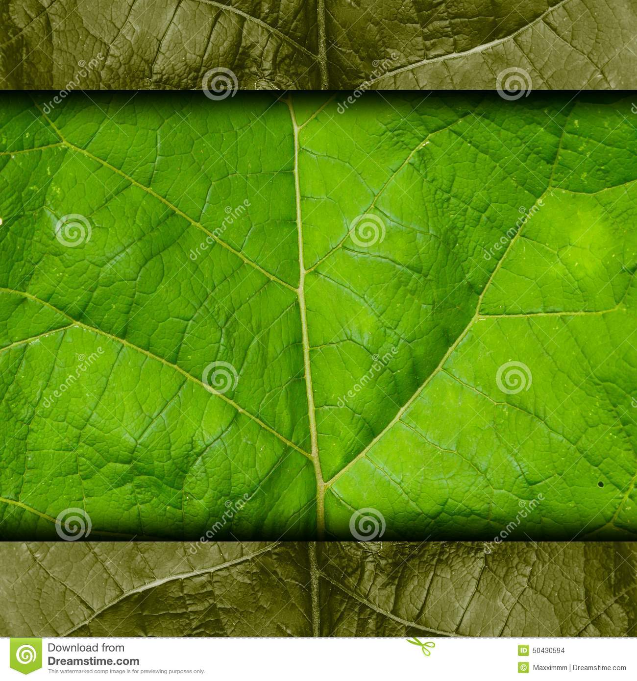 papier peint de fond de texture d 39 arbre vert de feuille macro photo stock image 50430594. Black Bedroom Furniture Sets. Home Design Ideas