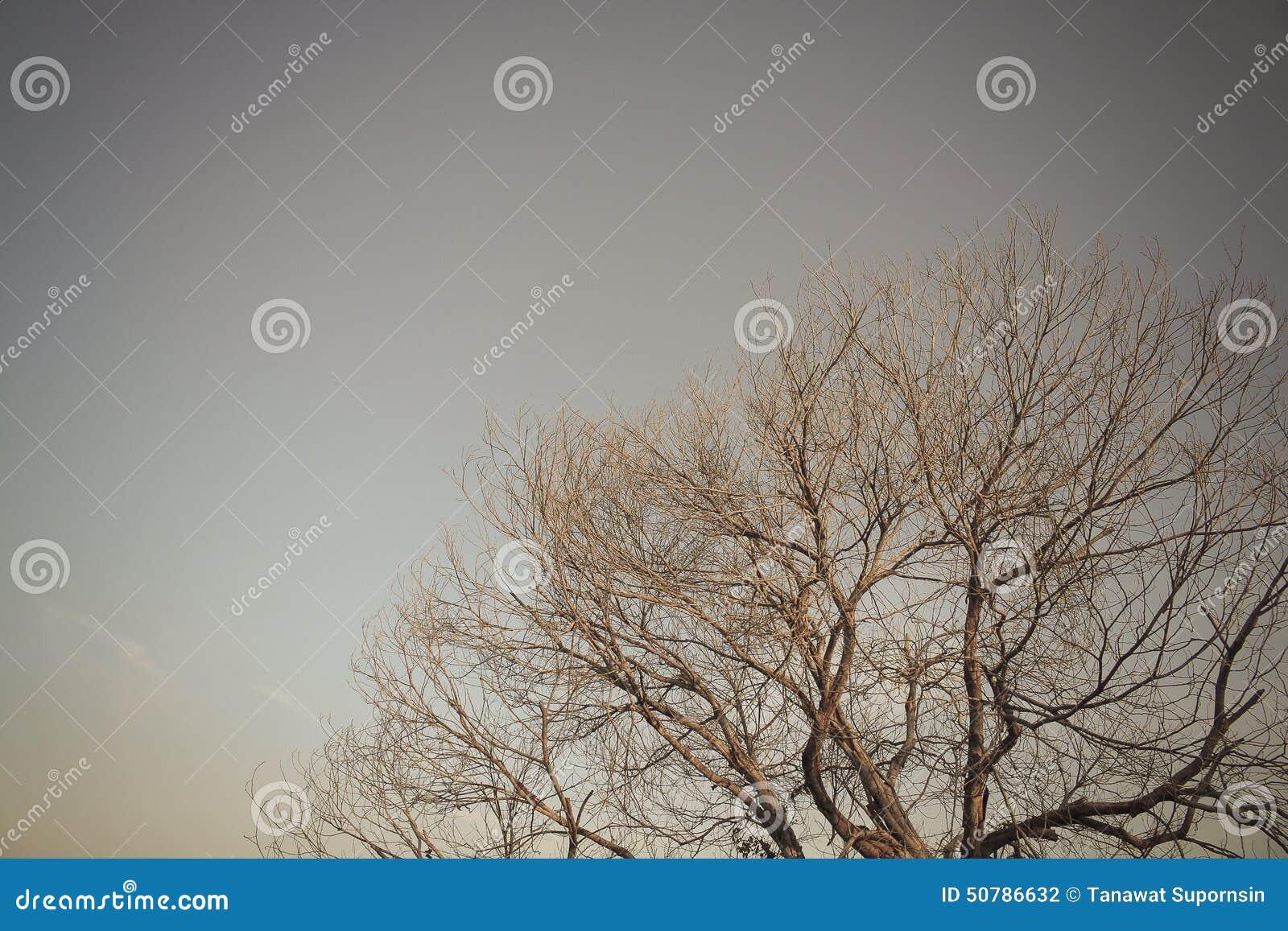 Papier Peint De Sepia De Foret D Arbre Photo Stock Image Du