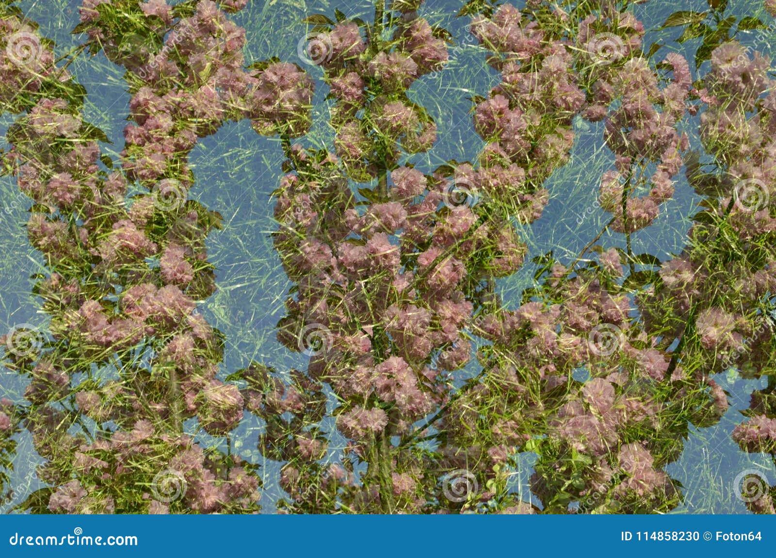 Papier Peint Japonais D Herbe Verte De Fleurs De Cerisier Photo