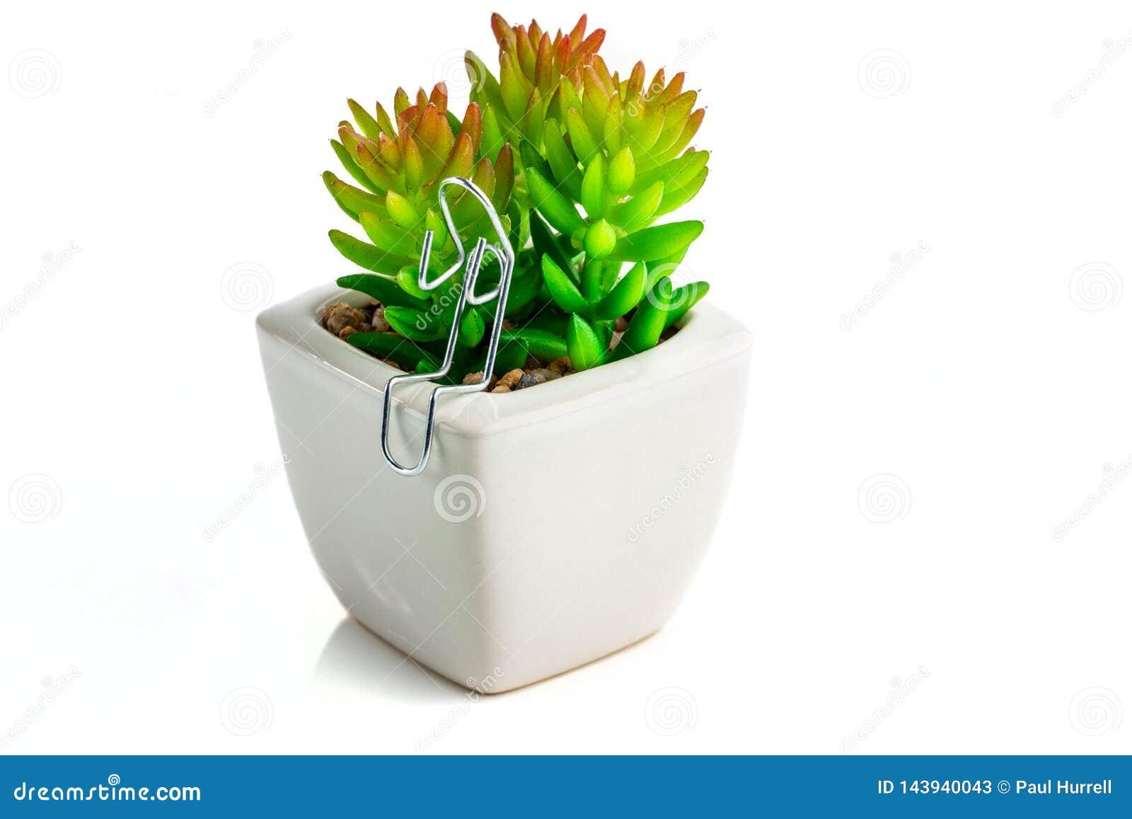 Papierowej klamerki charakter siedział z Kaktusową rośliną
