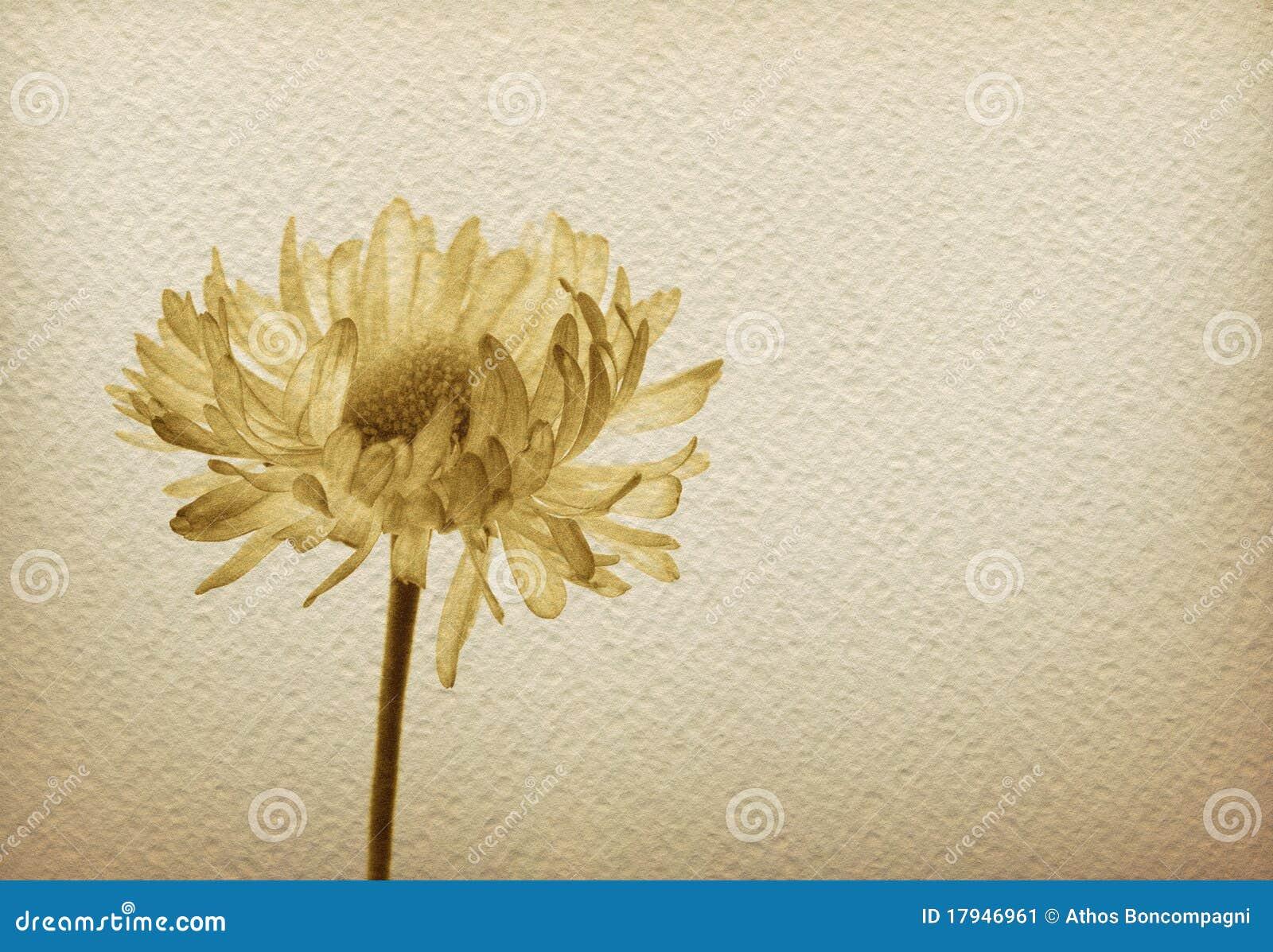Papierowy kwiatu rocznik