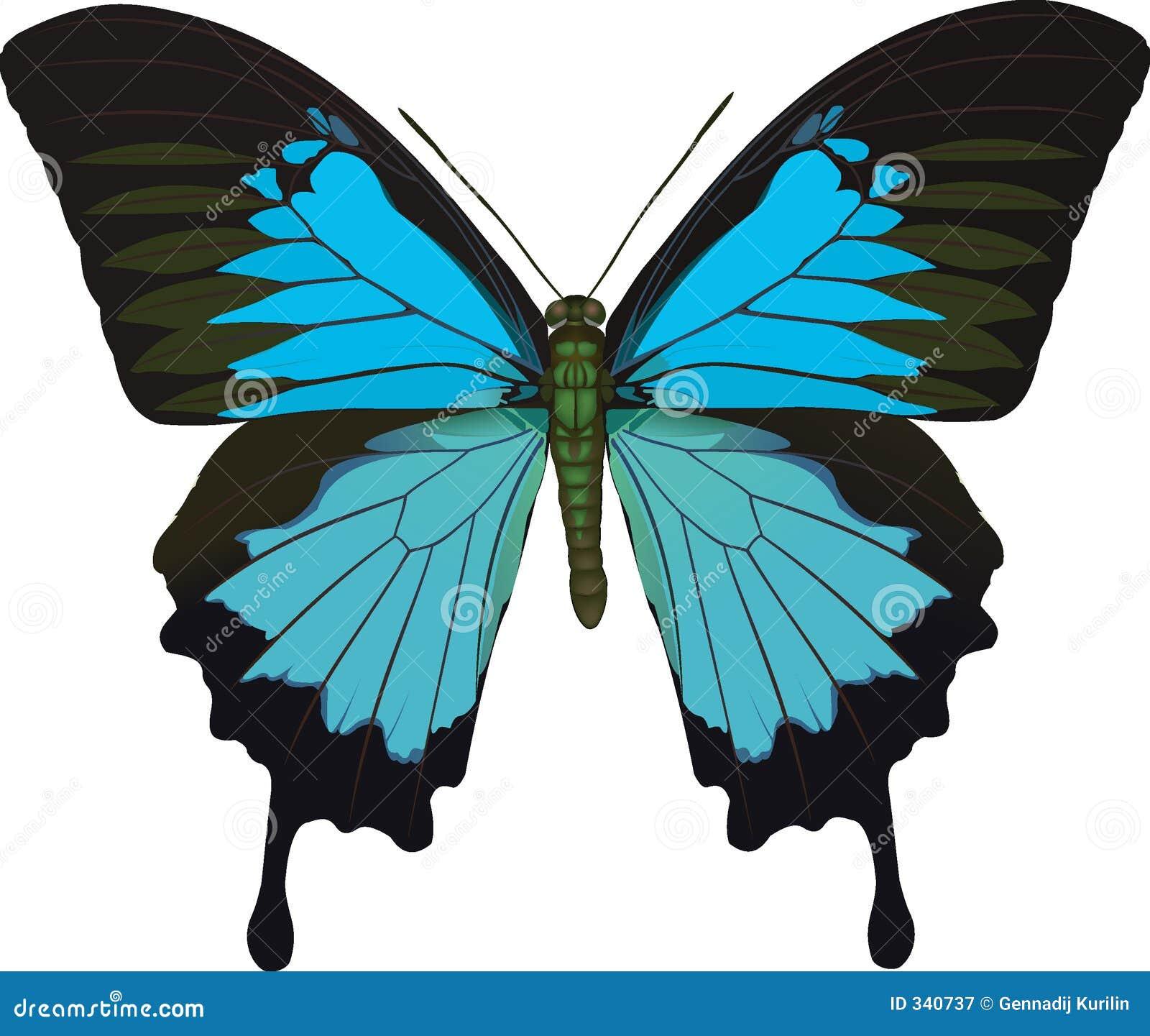 Papilio Ulises