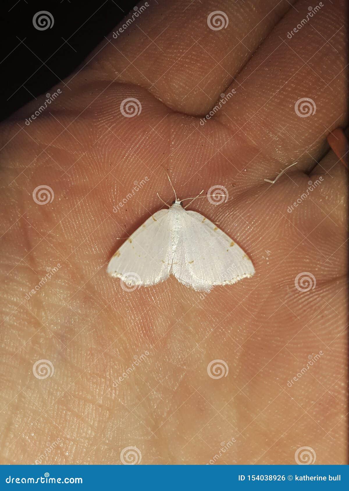 Papillon blanc avec l orange