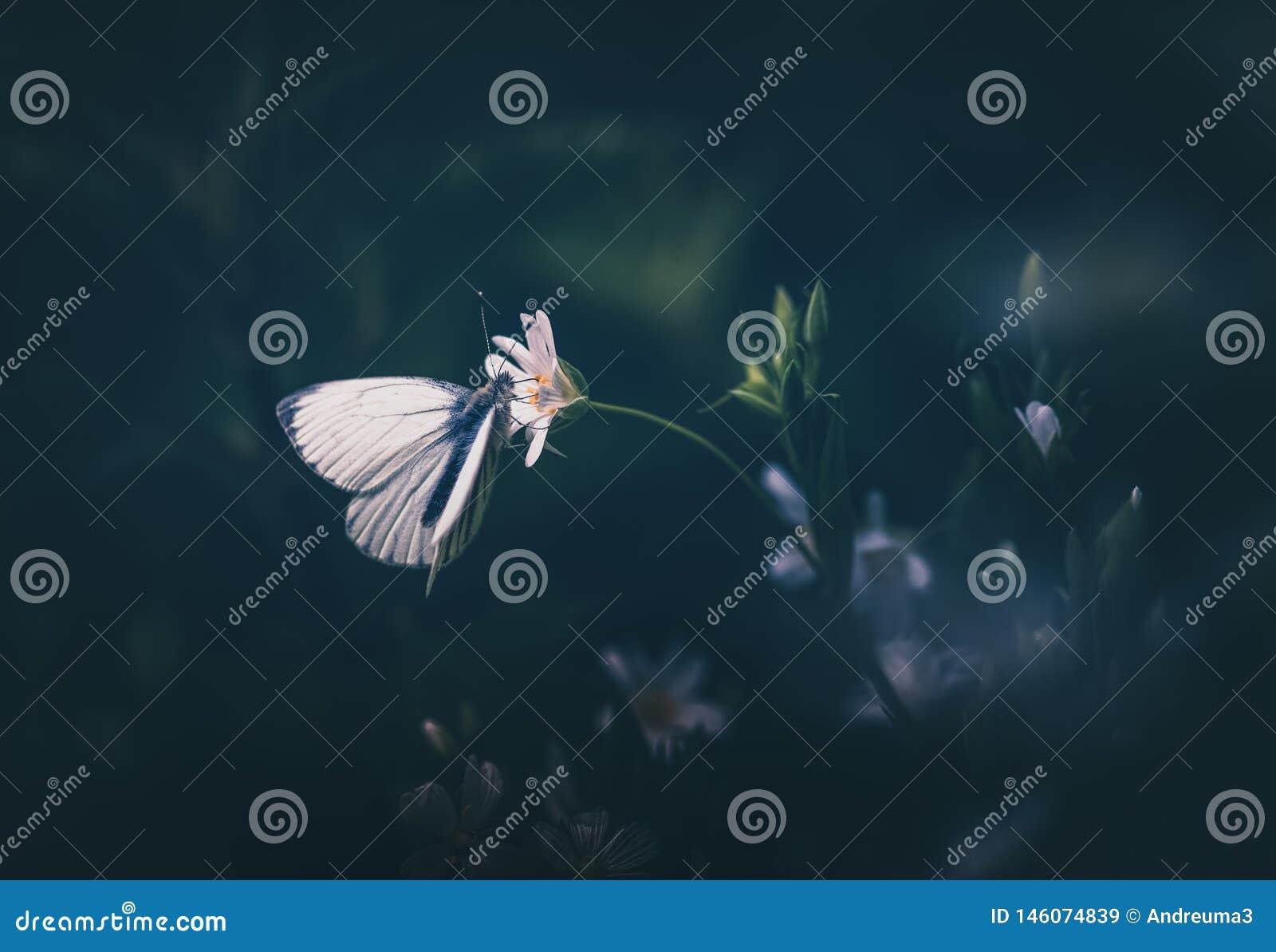 Papillon blanc en nature