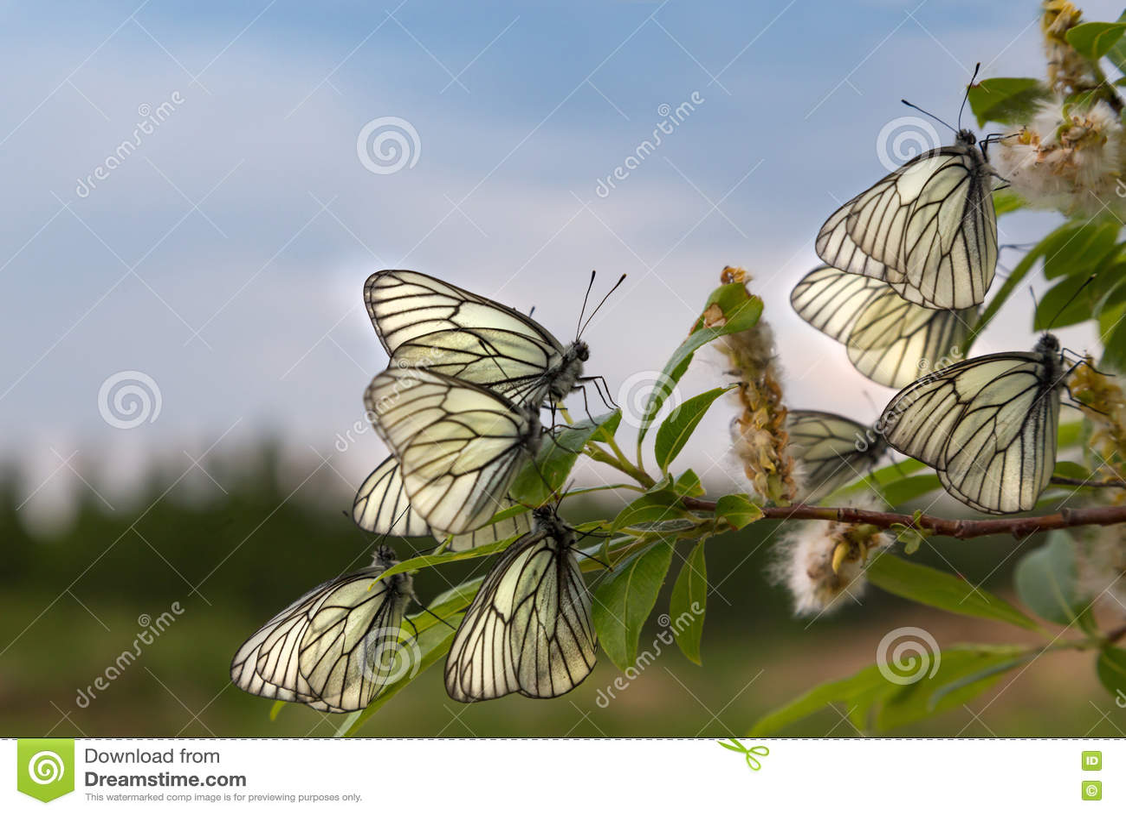 Papillon blanc sur un fond de ciel bleu