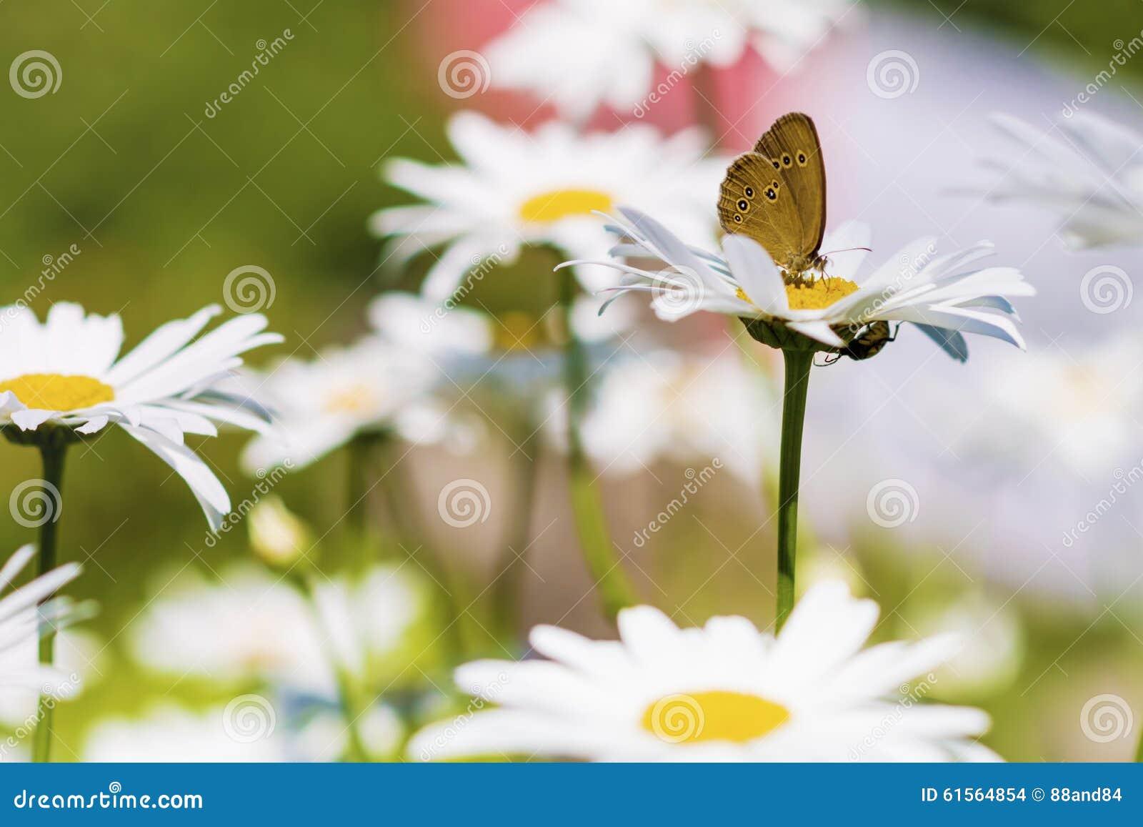 Papillon dans un jardin de fleurs photo stock image for Un jardin de fleurs