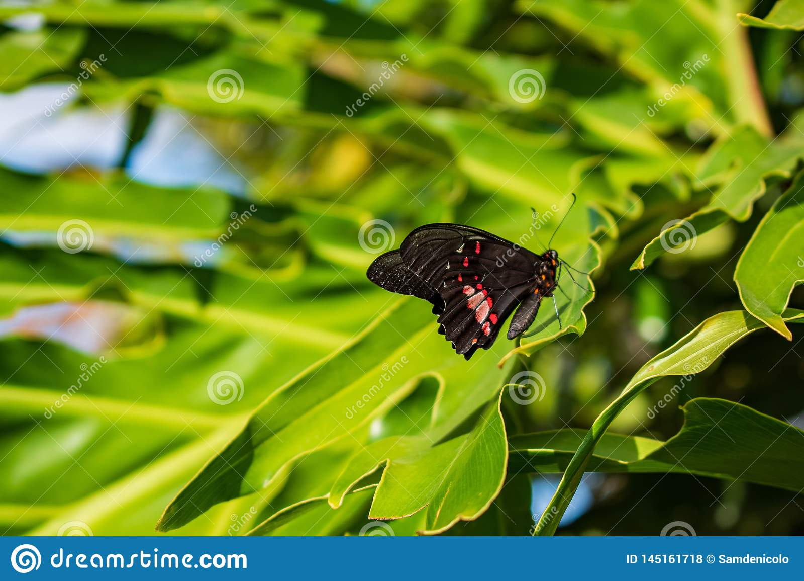Papillon dans une feuille verte