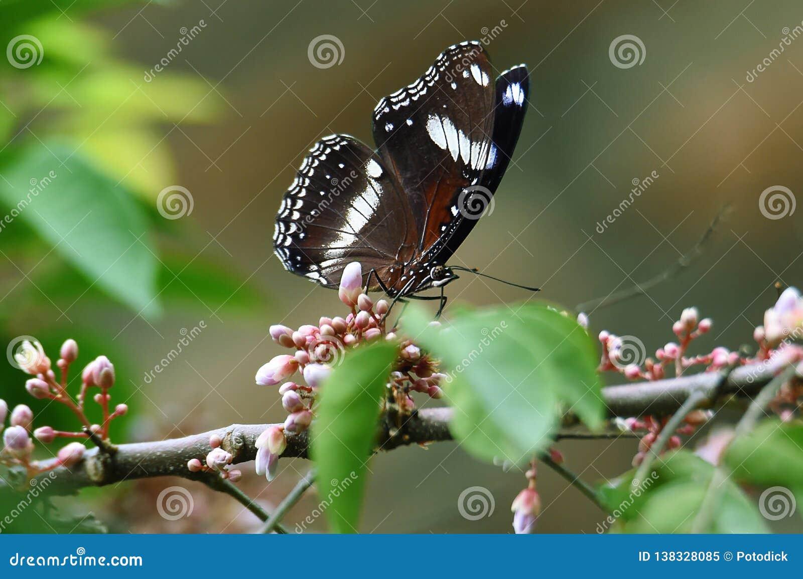 Papillon noir et blanc sur les fleurs vertes