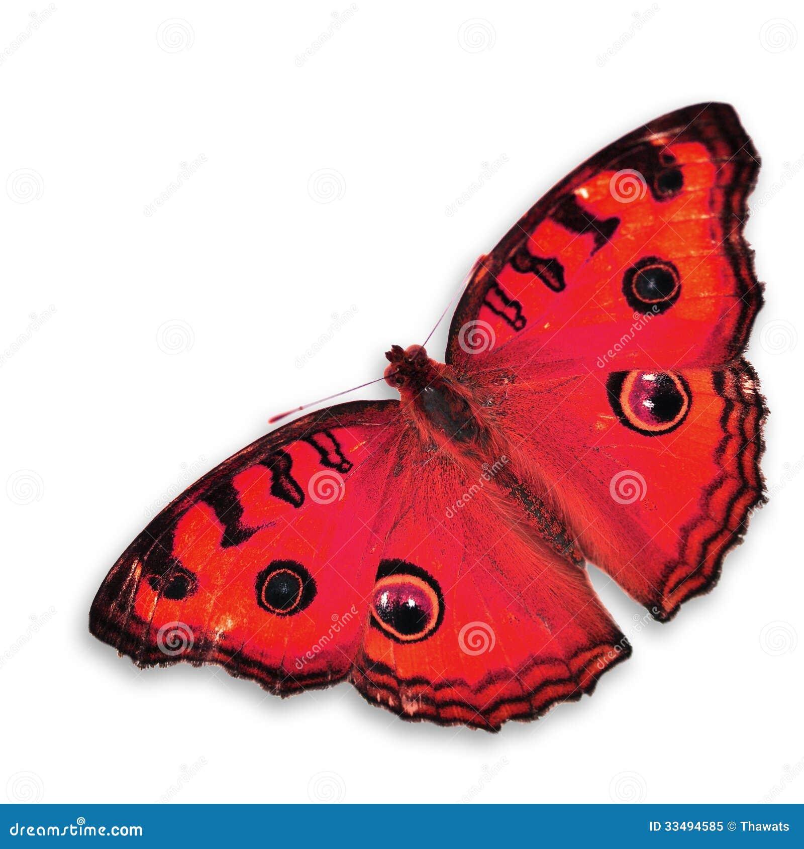 papillon rouge image stock image du rouge papillon 33494585. Black Bedroom Furniture Sets. Home Design Ideas