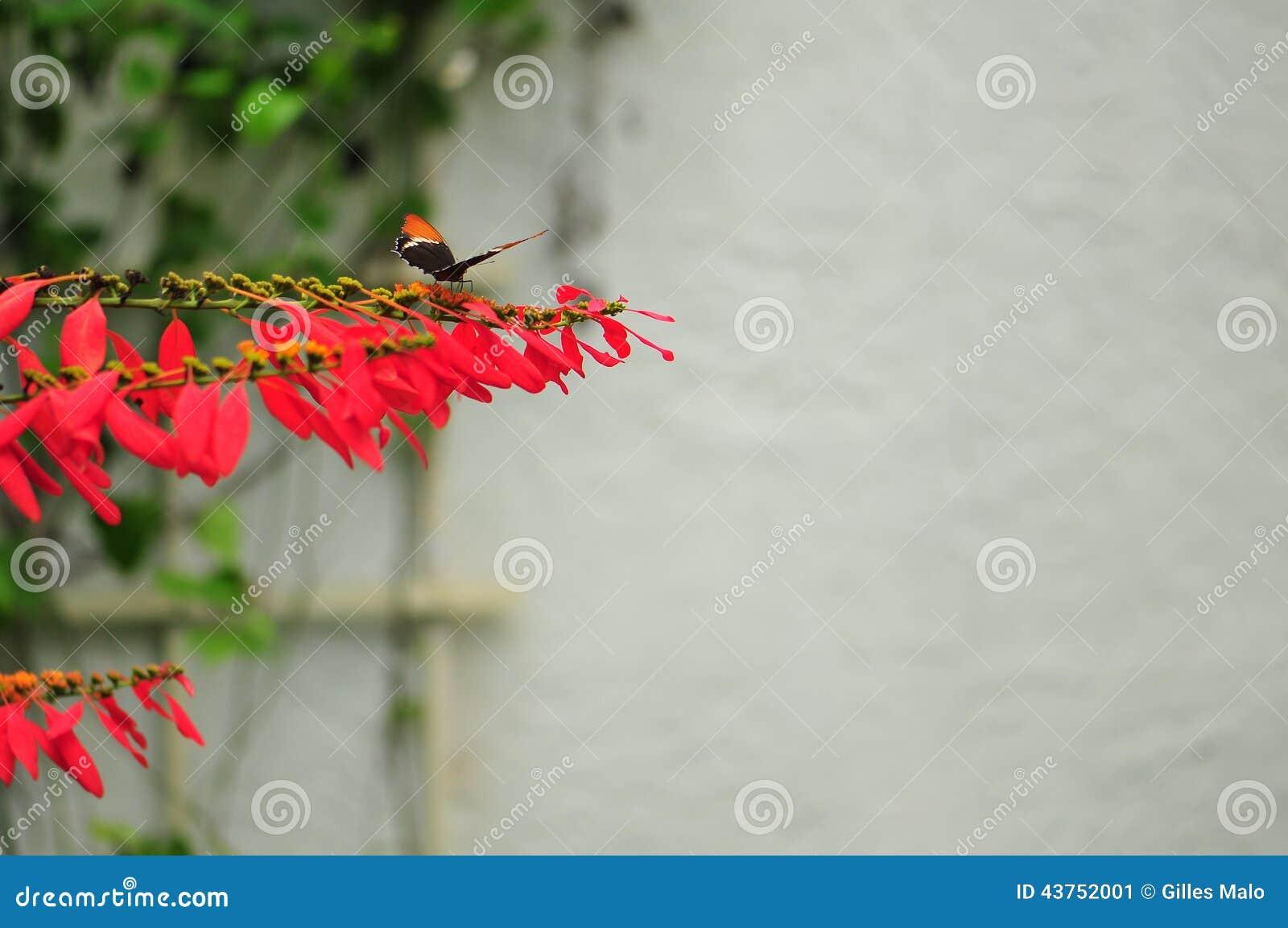 Papillon Rouillé-incliné de page sur les fleurs jaunes