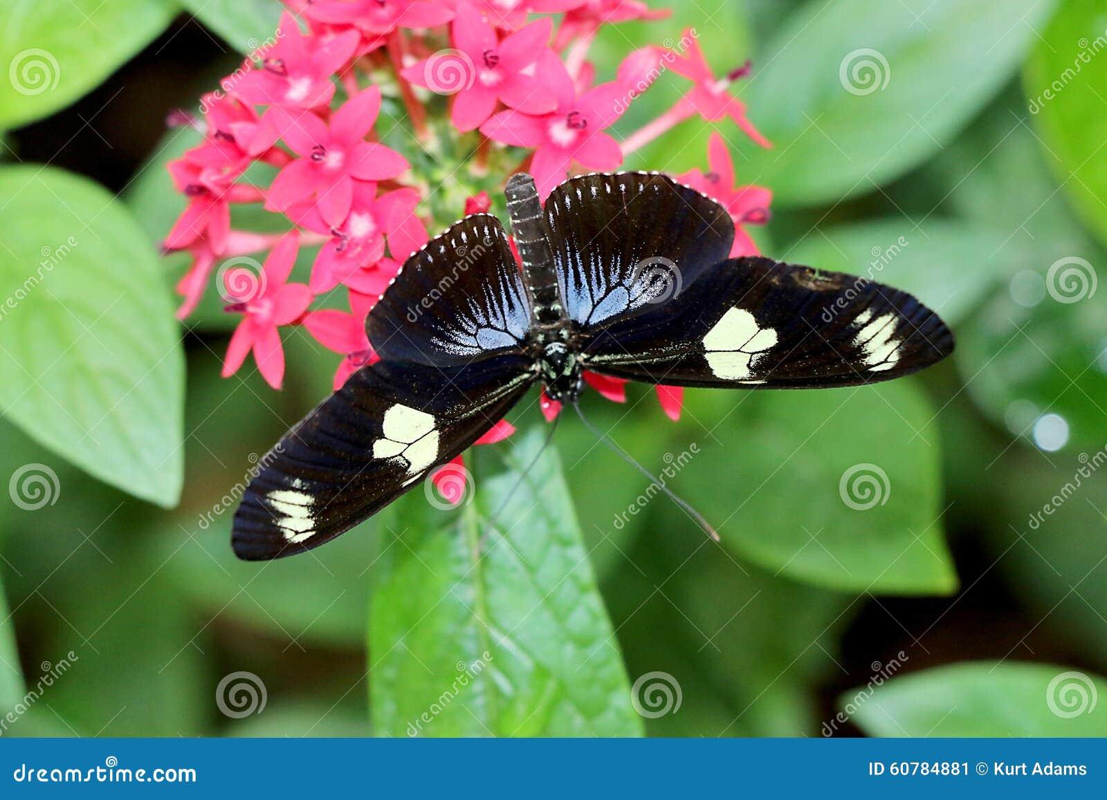 Papillon sur la fleur image stock image du papillon - Papillon fleur ...