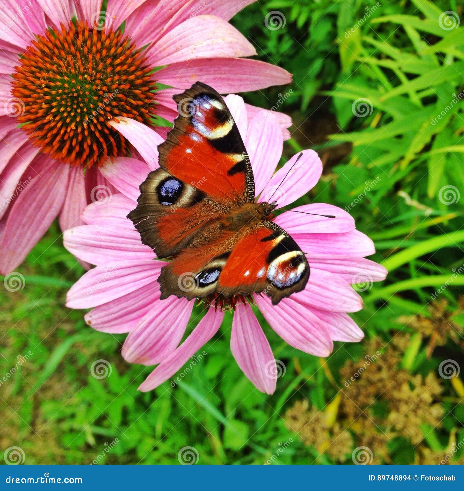 Papillon sur la fleur photo stock image du faune fleur - Papillon fleur ...
