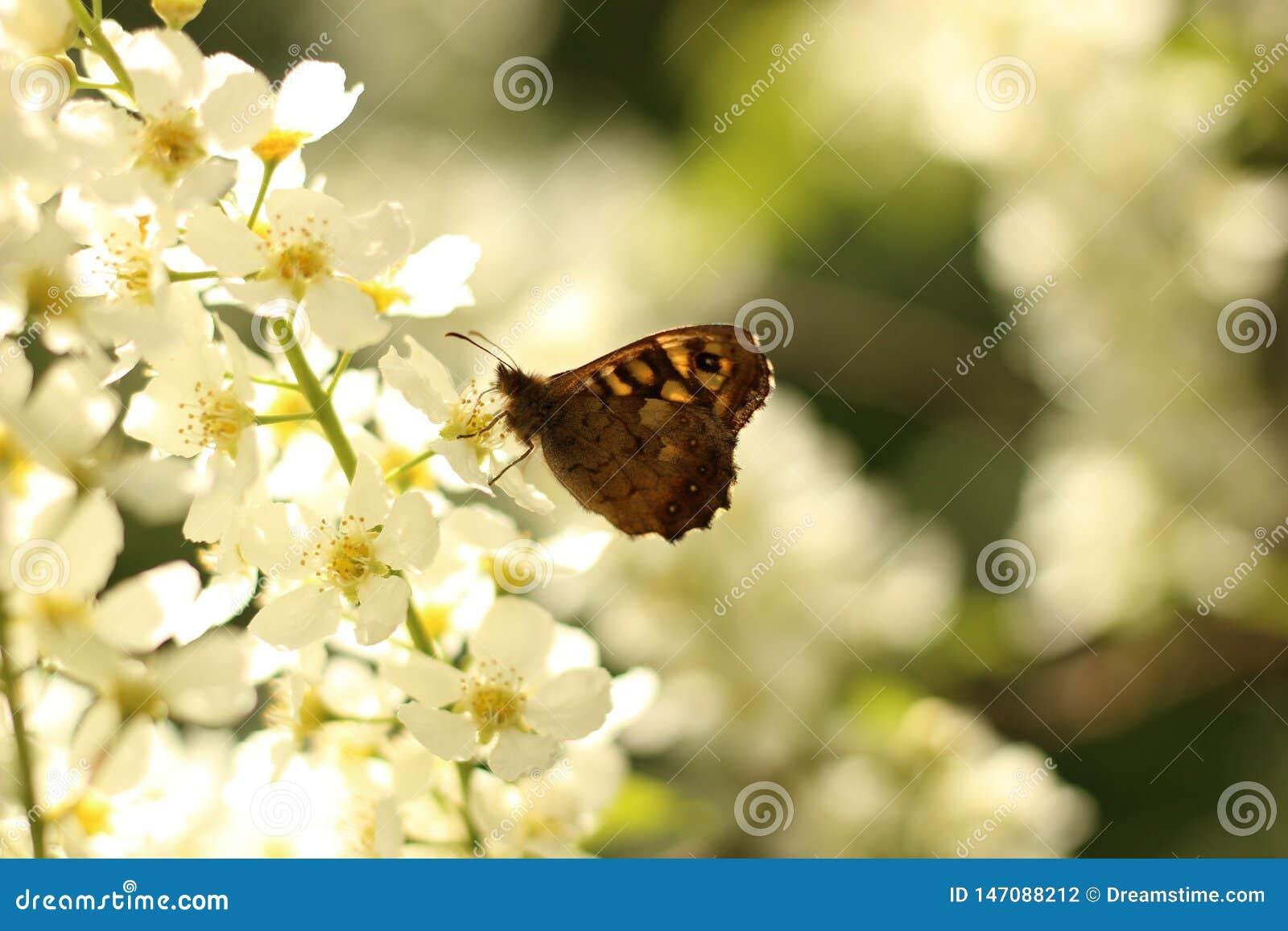Papillon sur un blanc avec la fleur jaune
