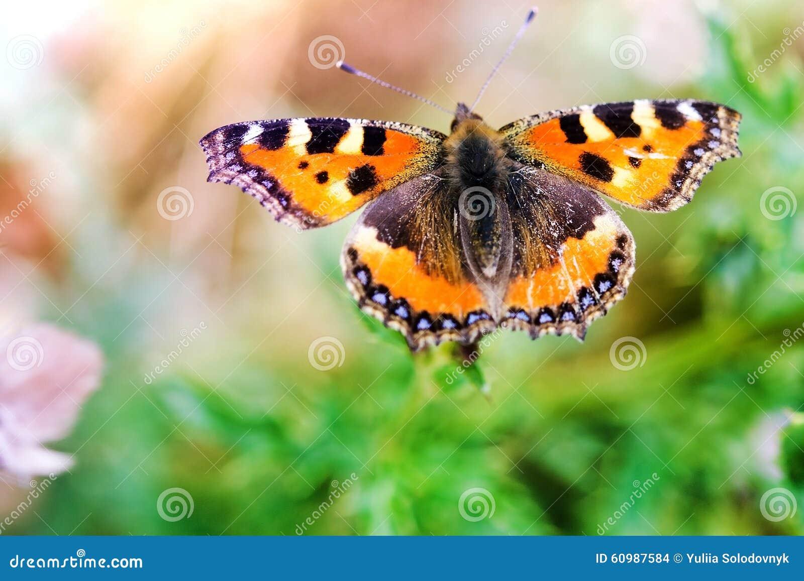 Papillon sur une fleur photo stock image 60987584 - Papillon fleur ...