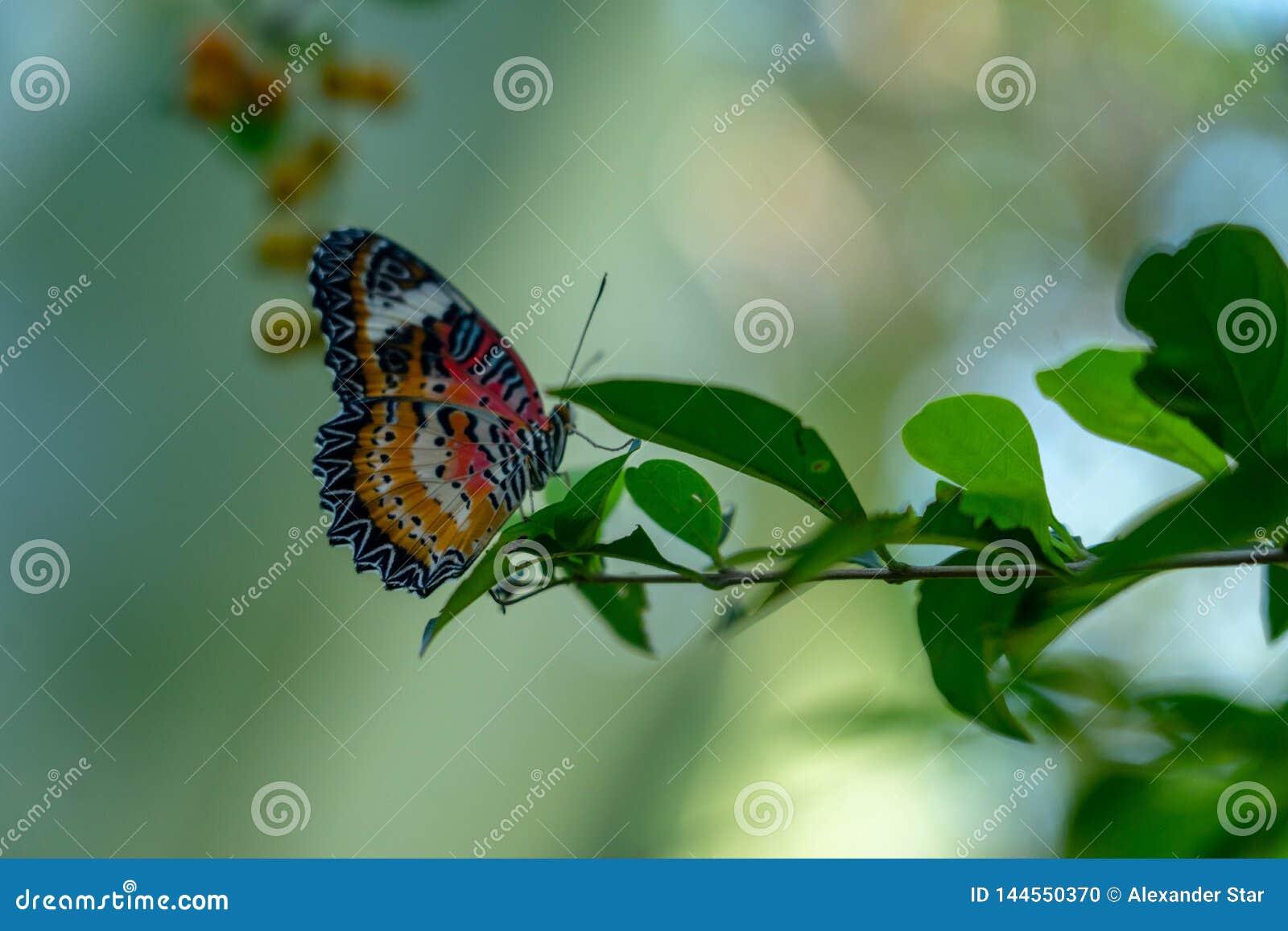 Papillon traînant sur une branche feuillue
