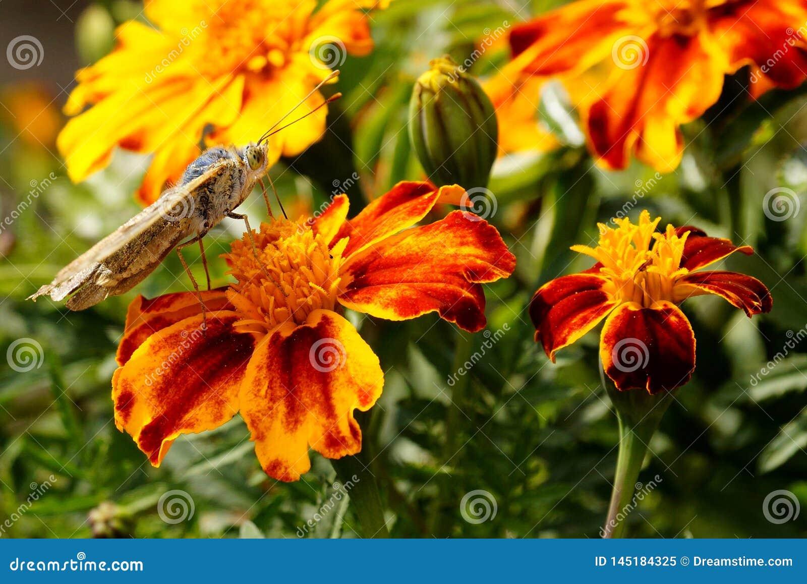 Papillons ?t? La beaut? naturelle de la Russie