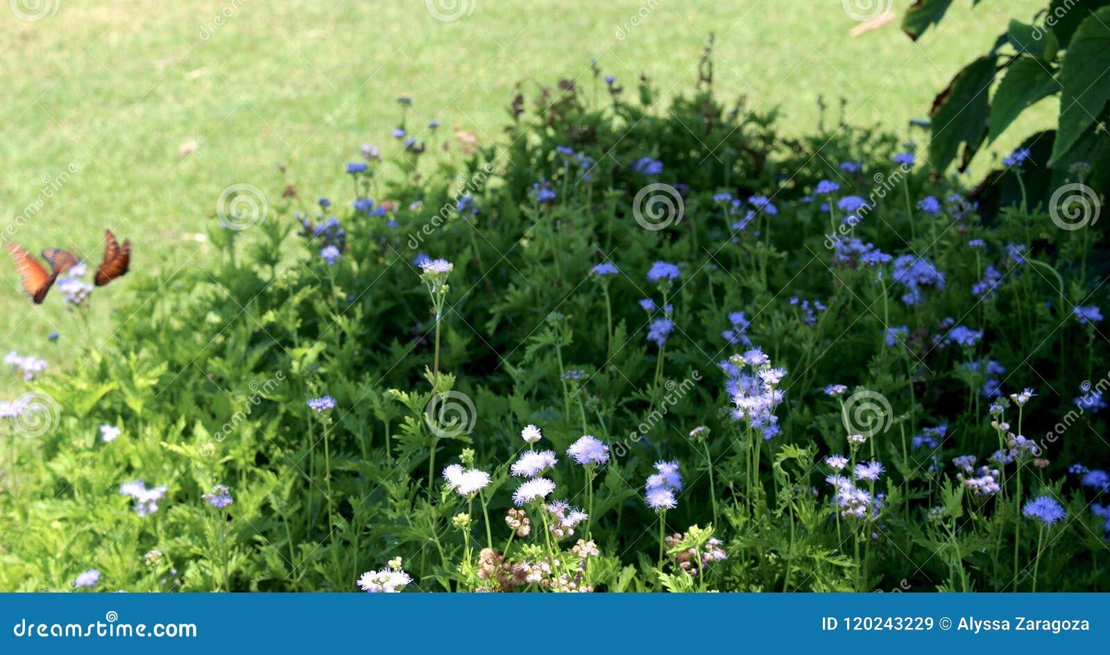 Papillons volant près des fleurs dans le buisson