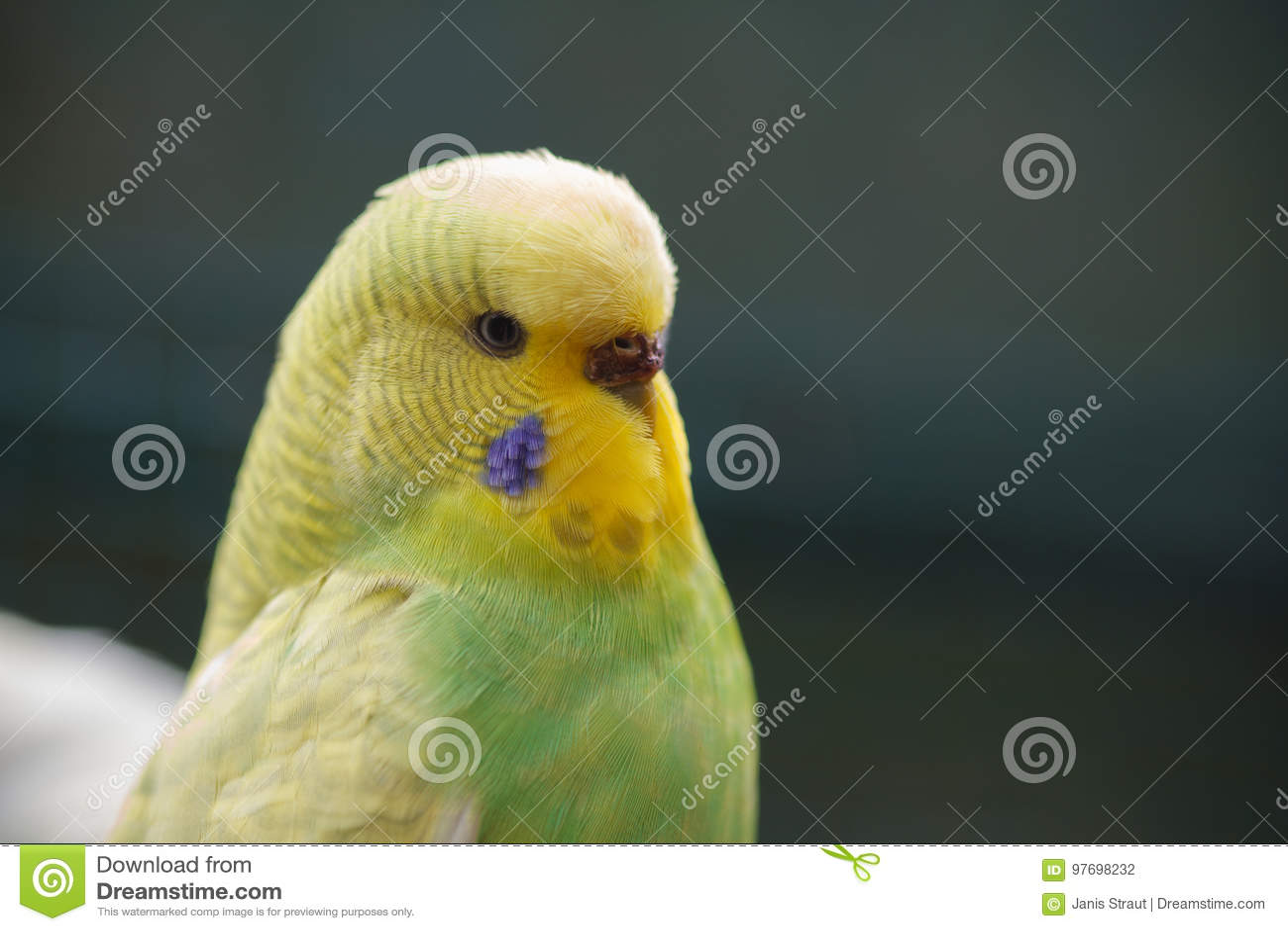 Uno sfondo giallo