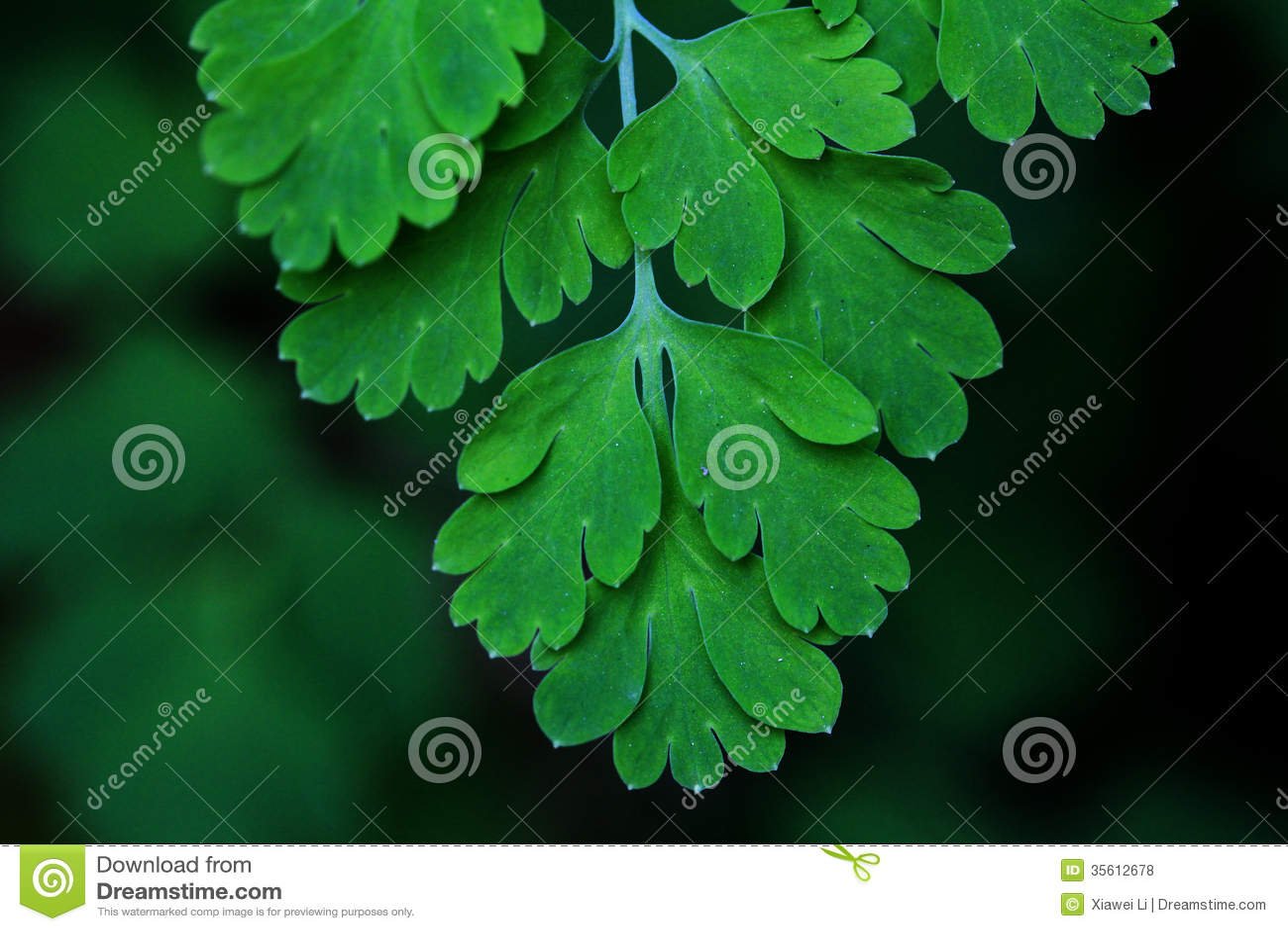 Paproć liści zielonego ulistnienia tropikalny tło. Las tropikalny