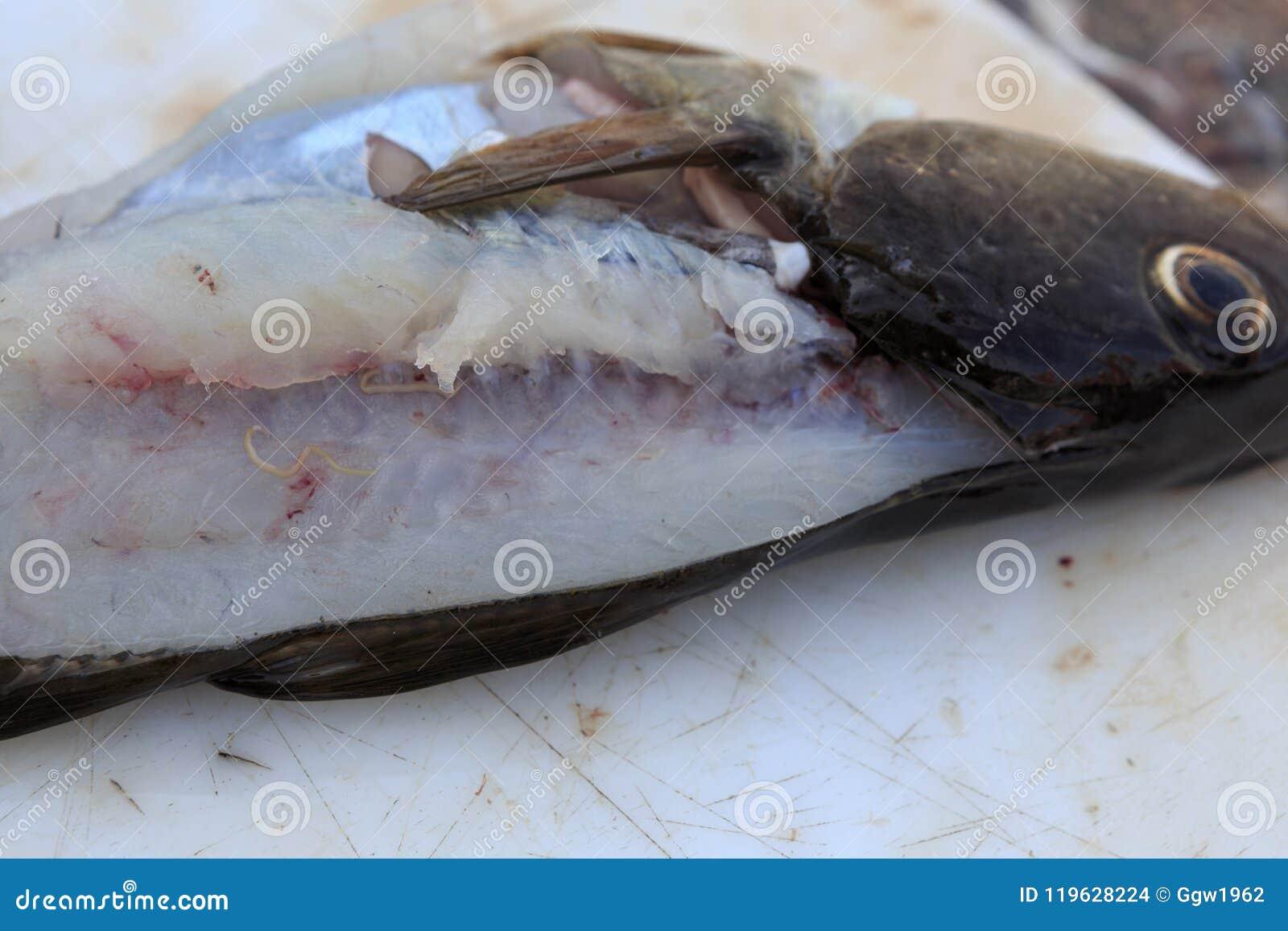 bacalao y gusanos