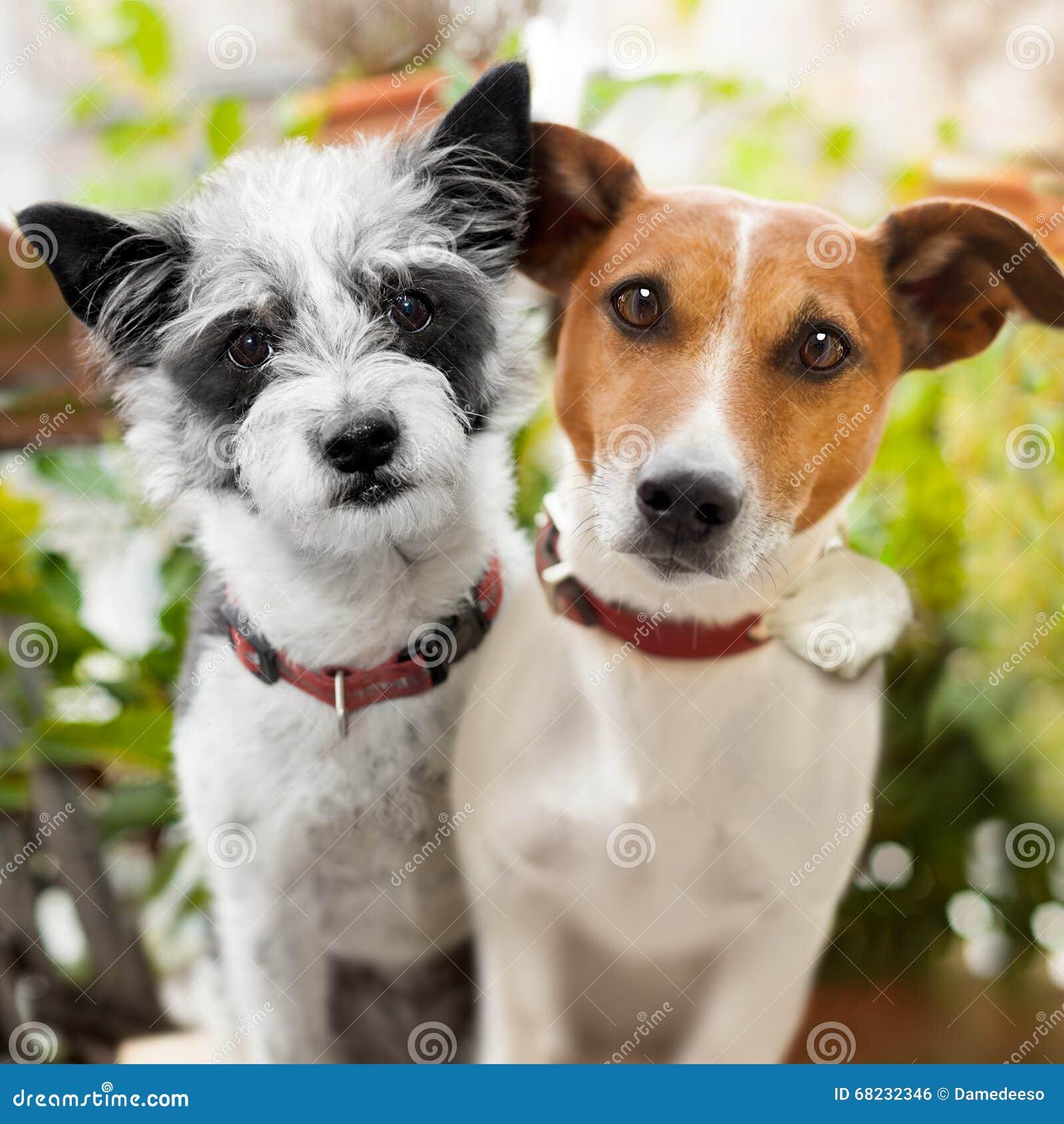 Par av hundkapplöpning som är förälskad på parkera