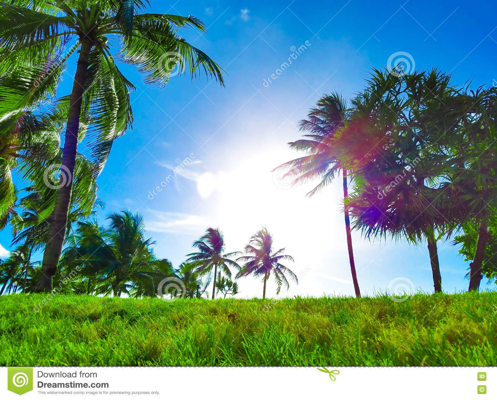 Paraíso da praia, céu azul, palmas verdes & vivas e grama