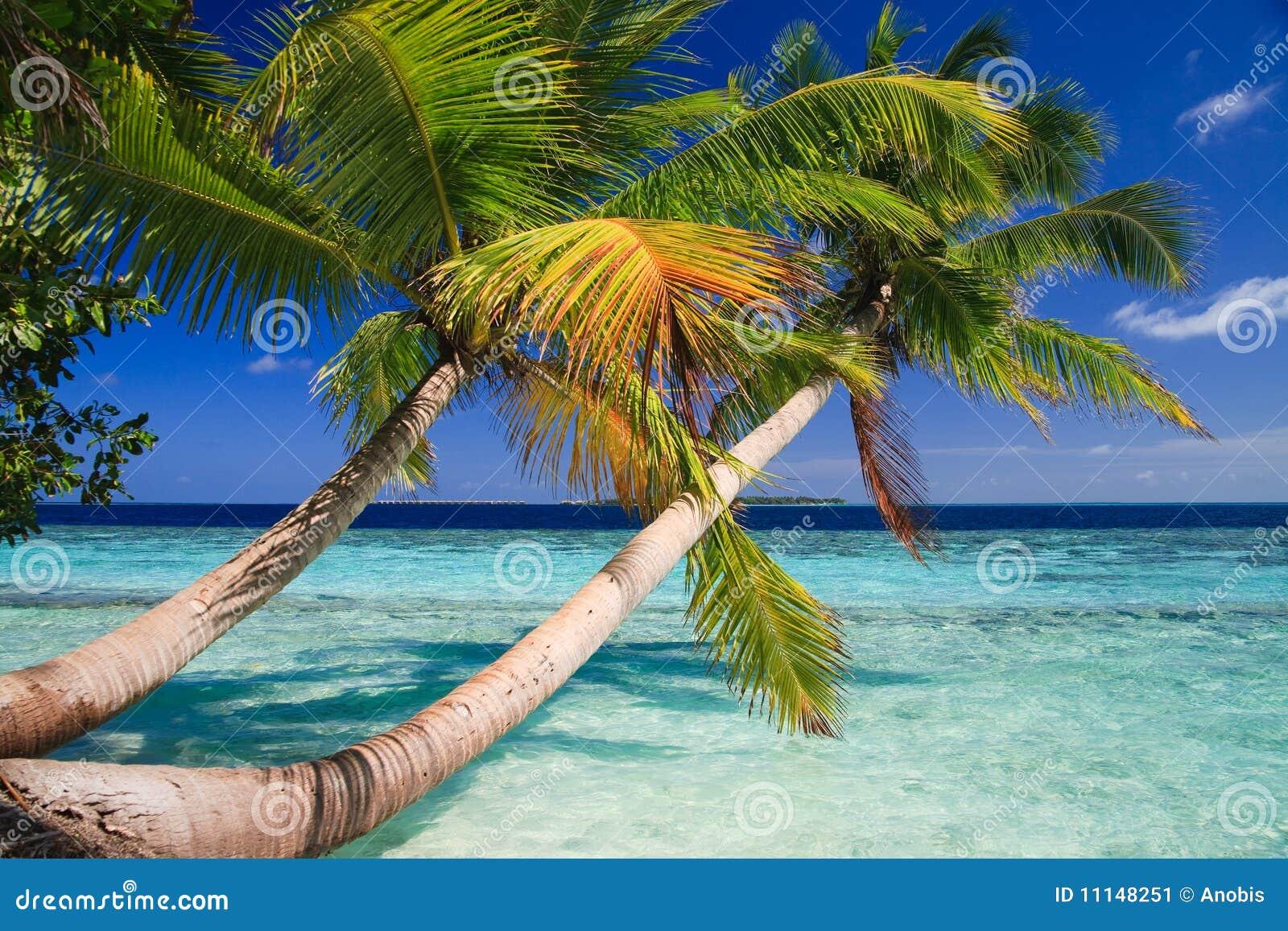 Paraíso tropical en Maldives