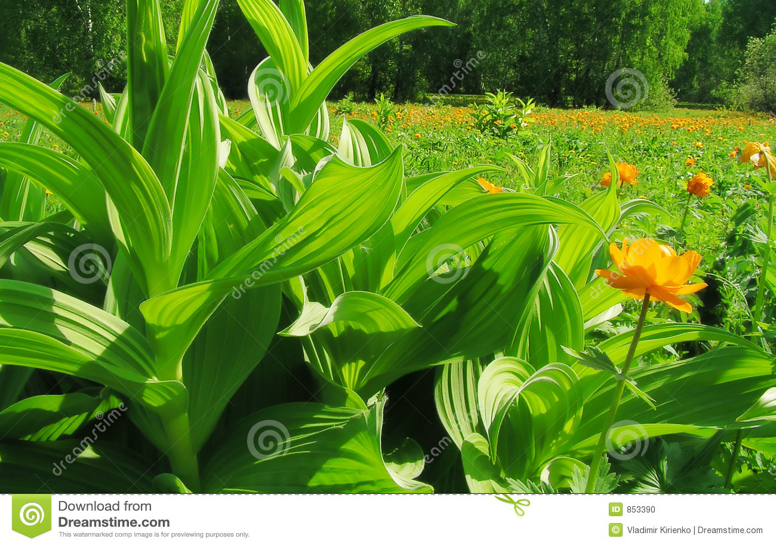 Paraíso verde