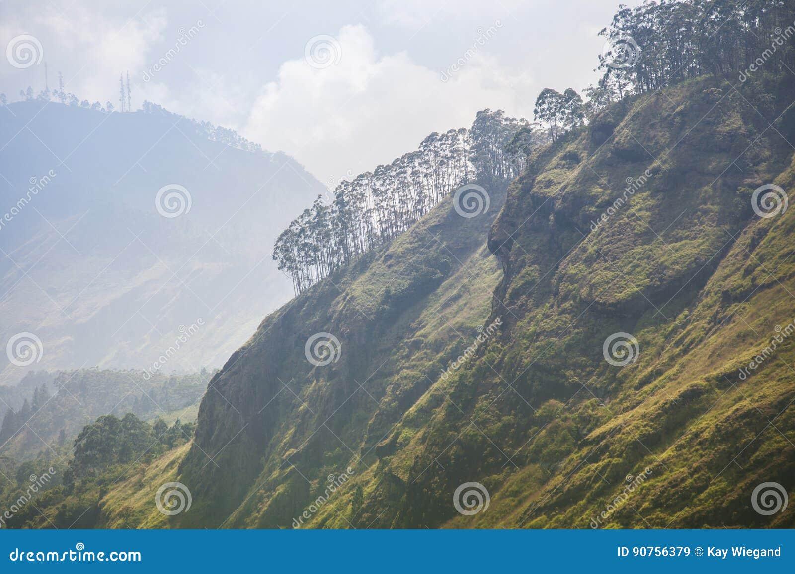 Paraíso verde en Sri Lanka