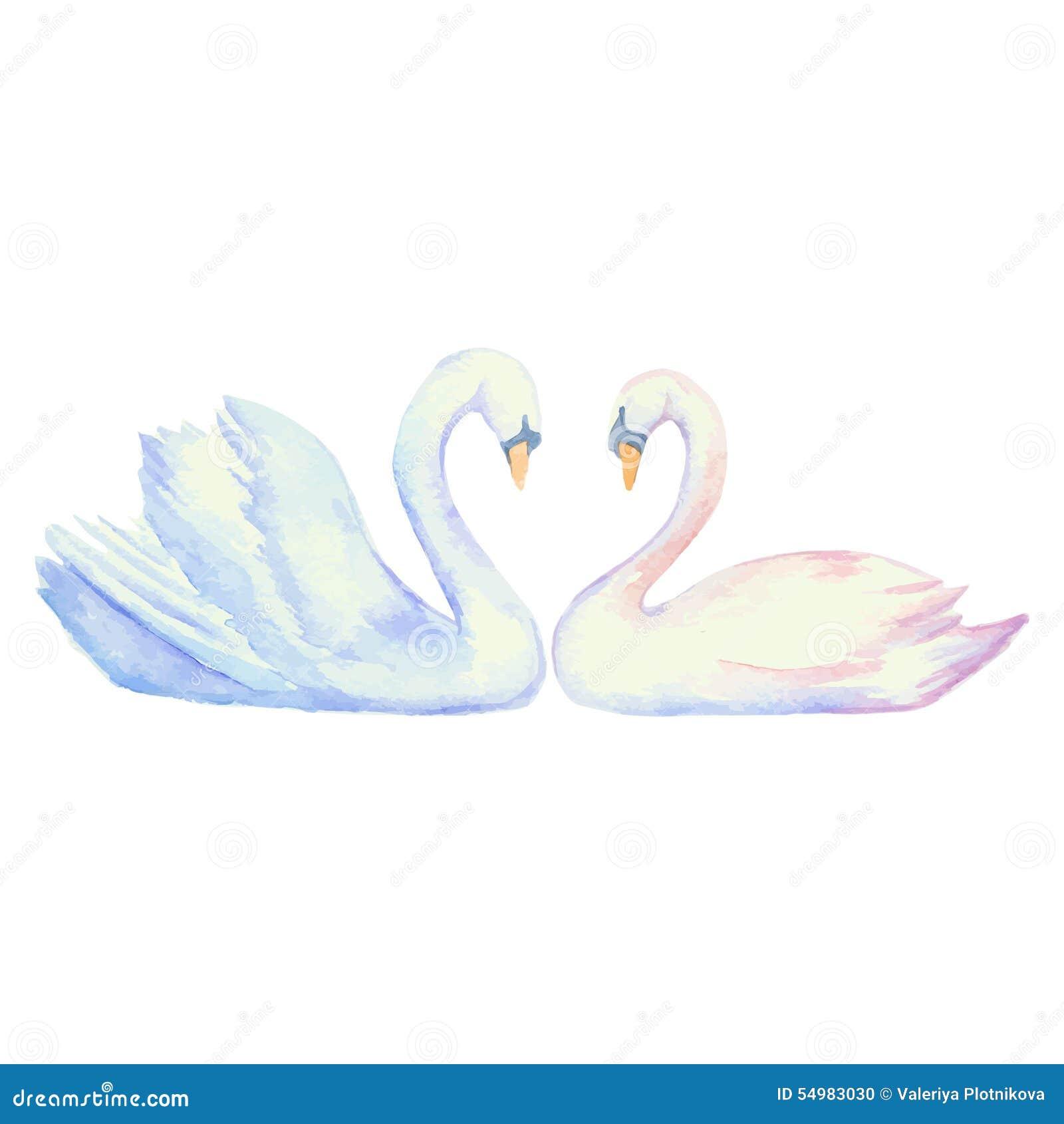 Para av swans