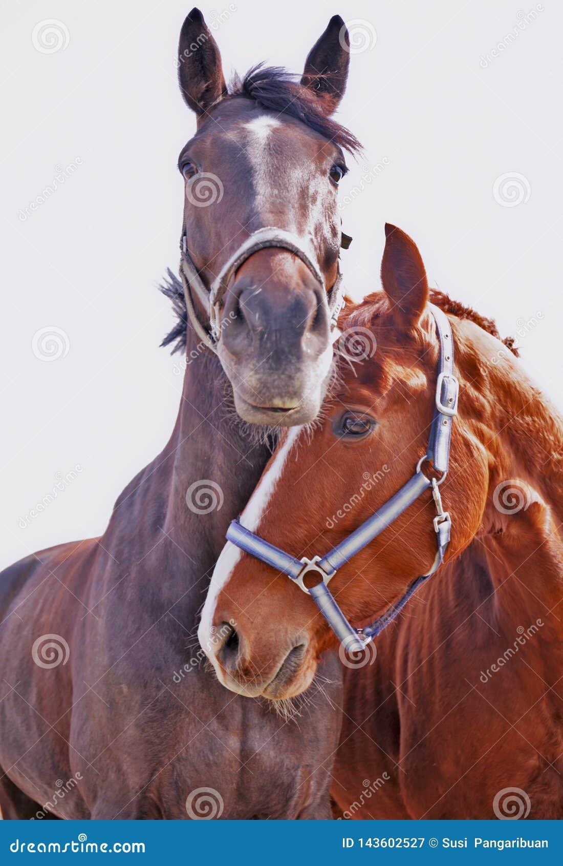 Para Końscy zawsze i Wpólnie