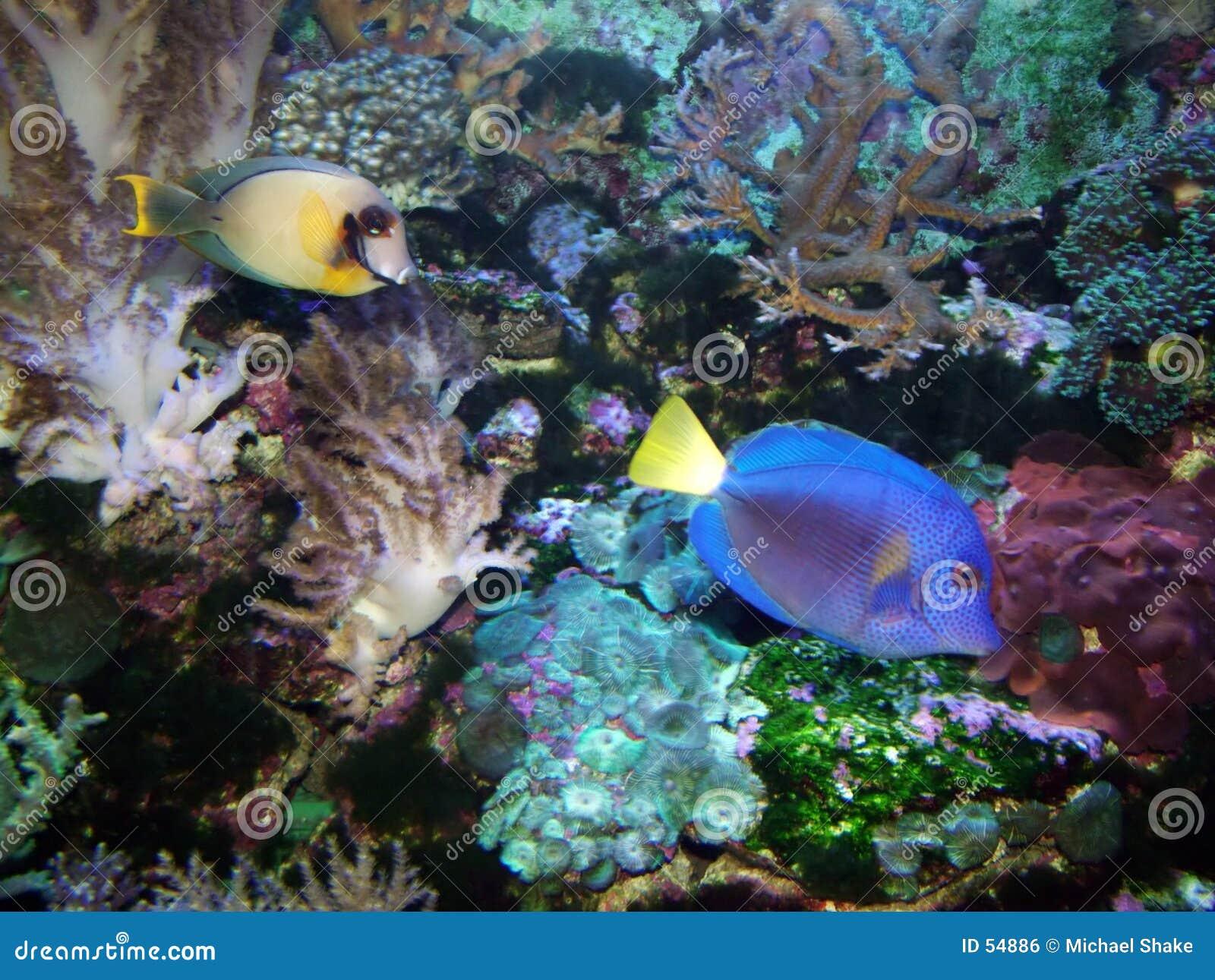 Download Paradis tropical photo stock. Image du océan, tropical, abstrait - 54886