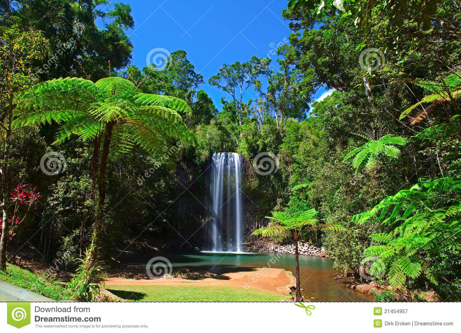 Paradis tropical de forêt tropicale de cascade à écriture ligne par ligne de fougère d arbre