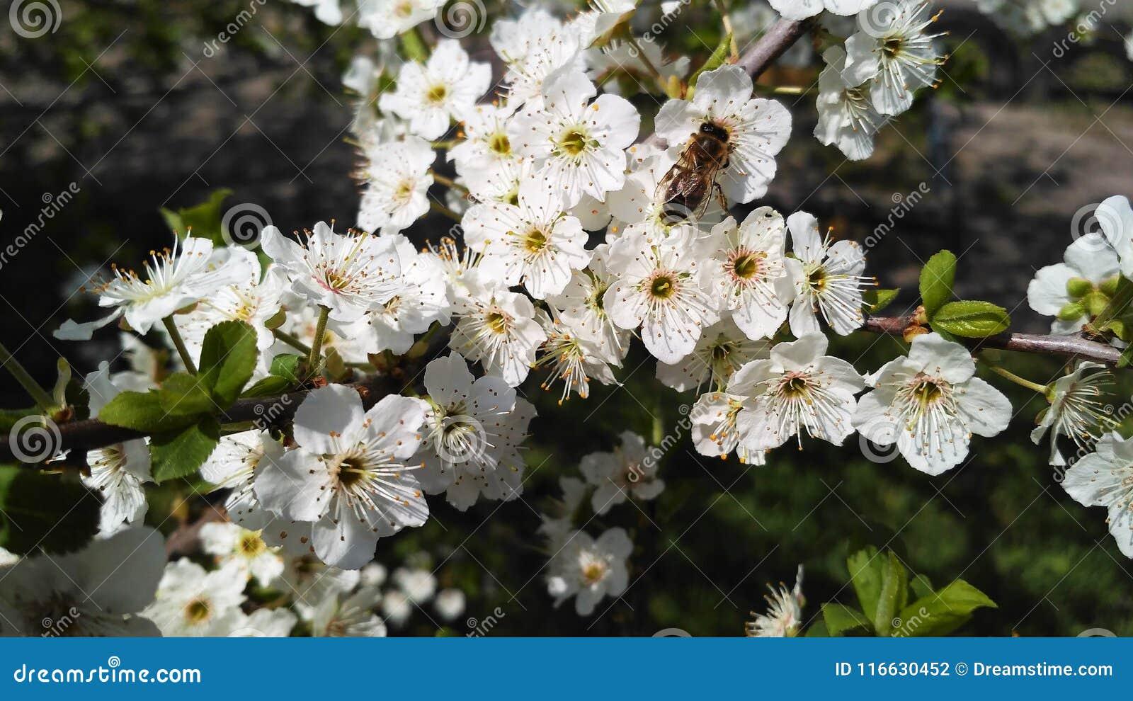 Paradise Of Flowers Stock Photo Image Of Garden Super 116630452