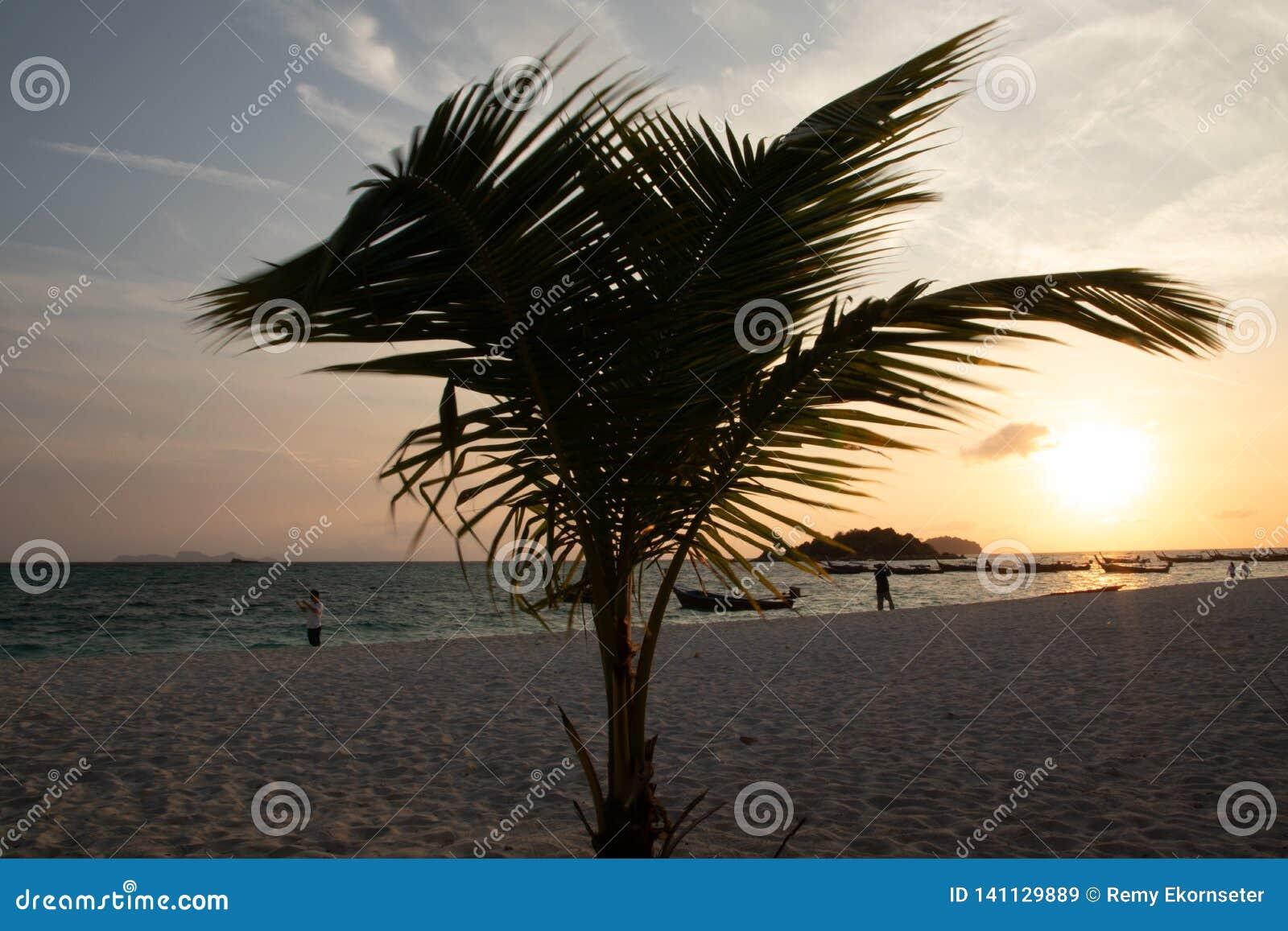 Paradise Island Crystal Clear Sea, Blu, palms, on fyre